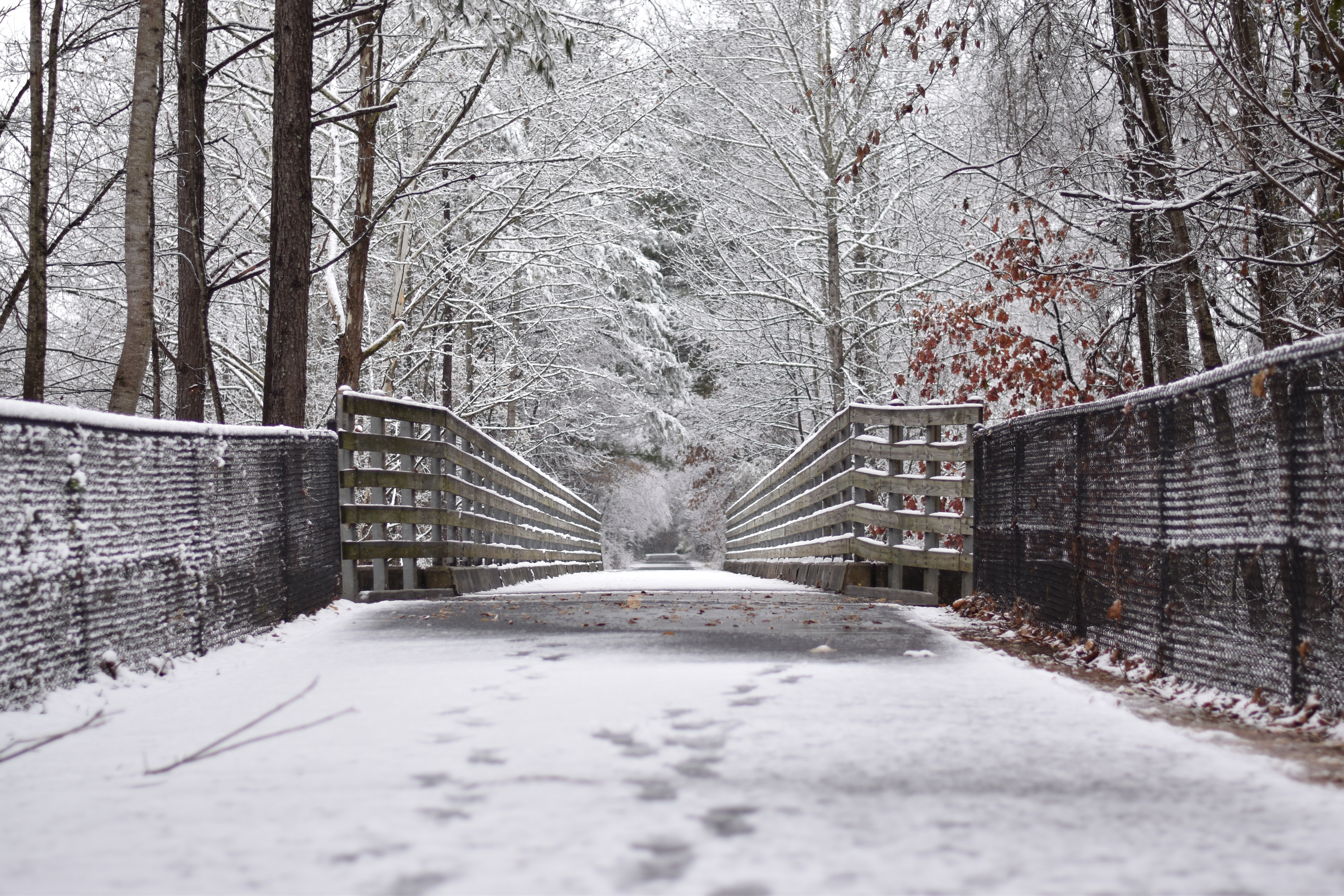snow covered bridge in between lined trees