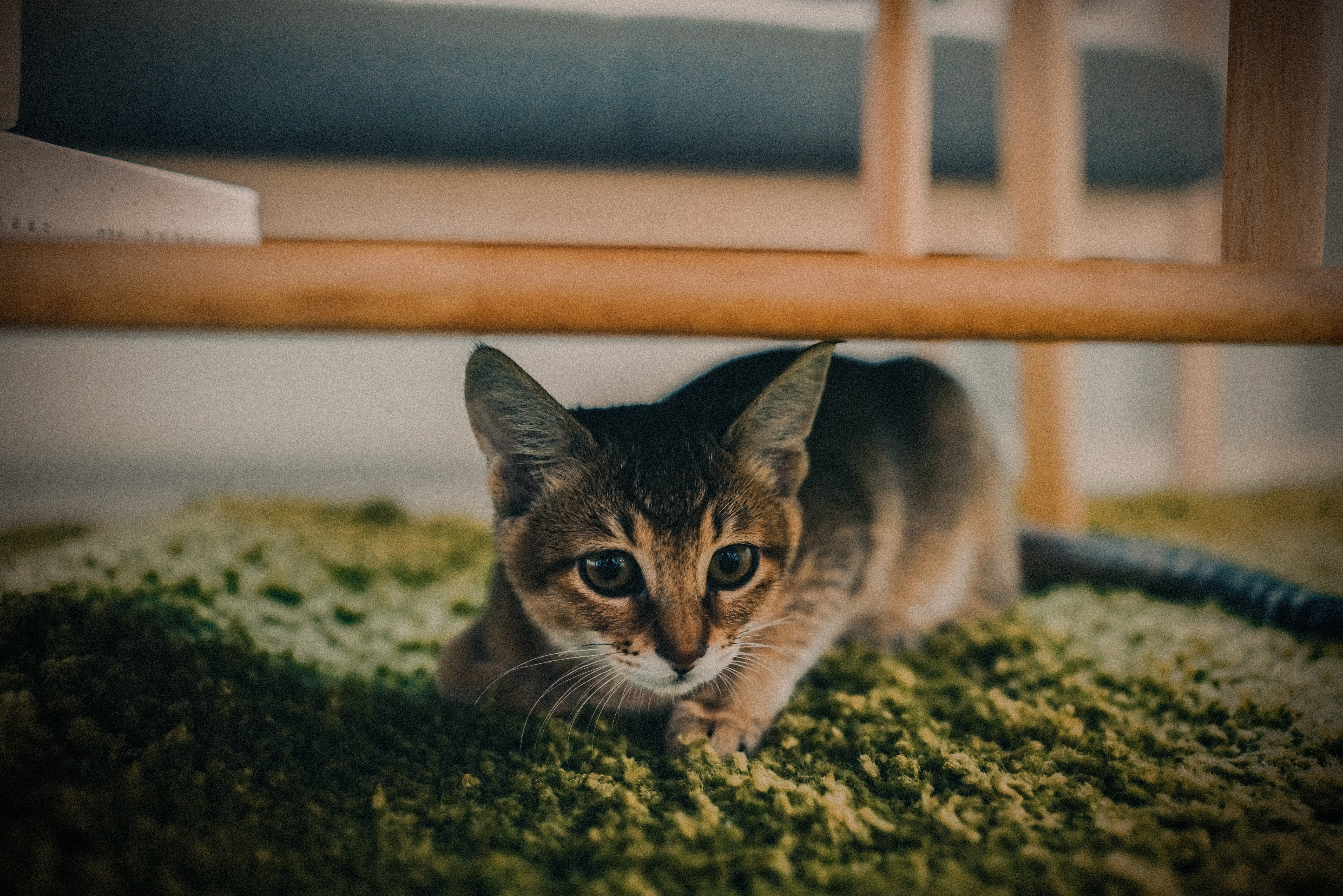 selective focus photography of brown tabby cat under brown wooden frame