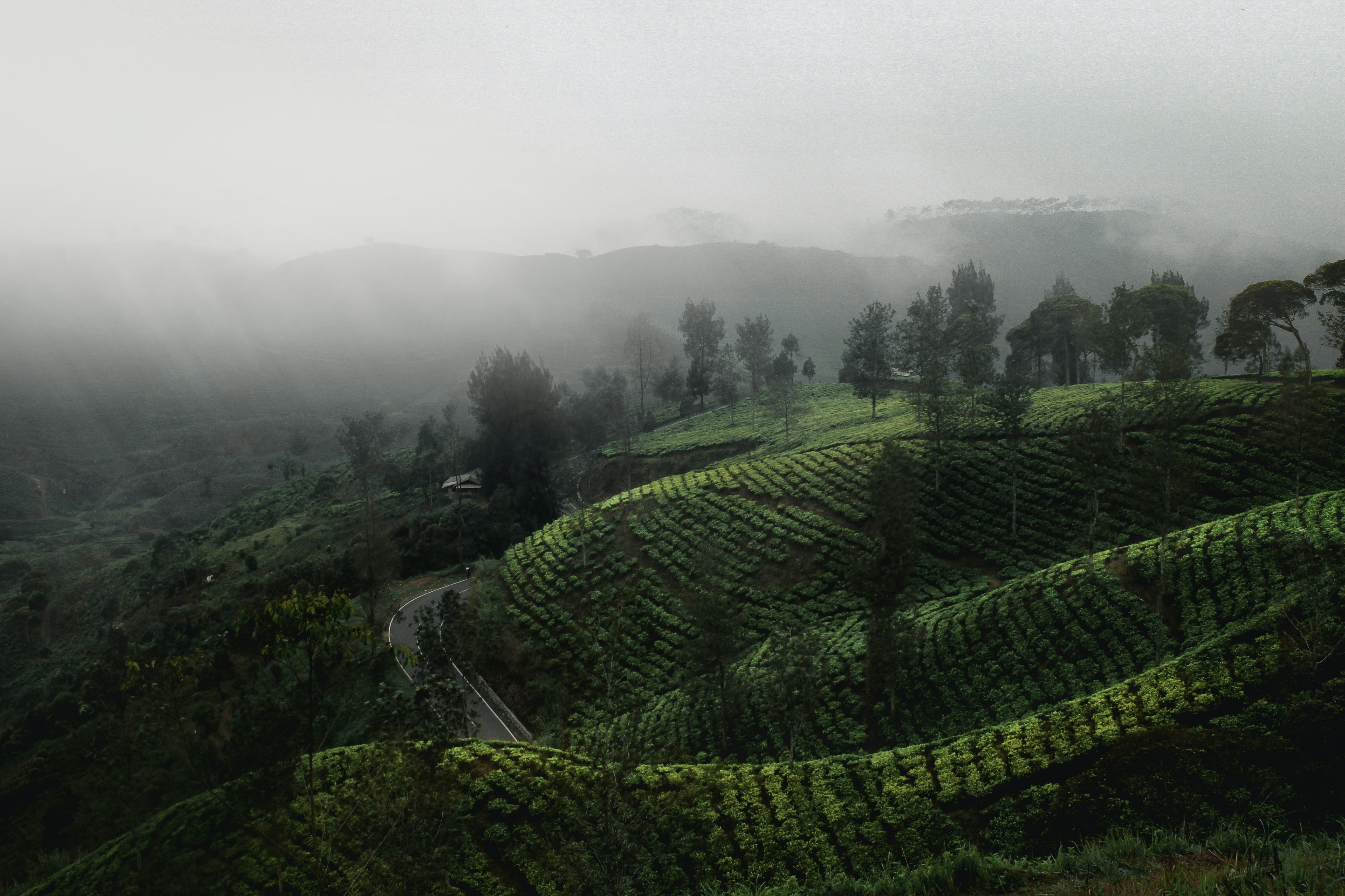 landscape photography of green mountain with fogs