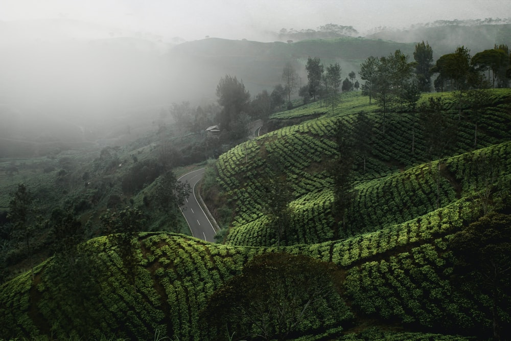 aerial view of foggy mountain