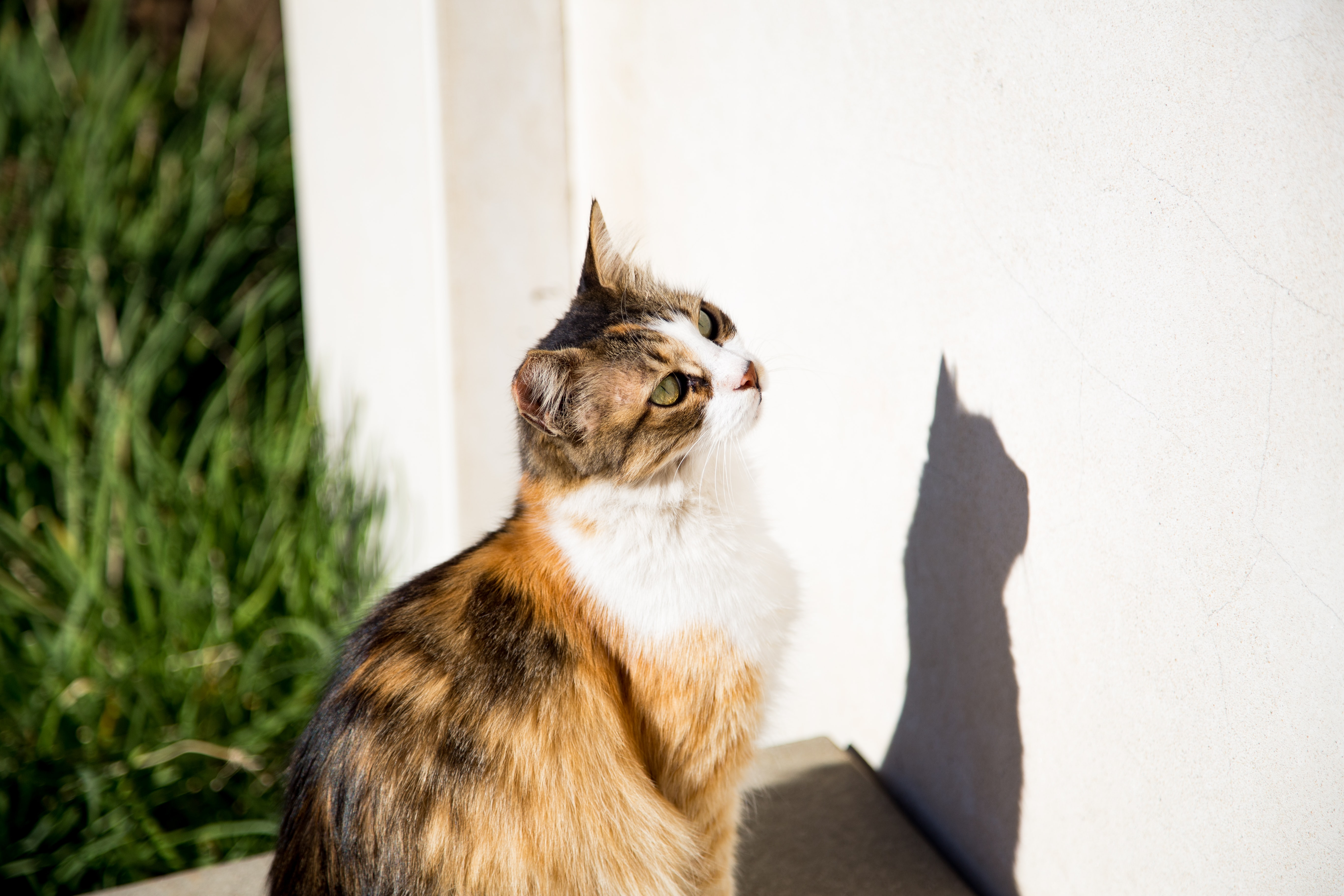 calico cat sitting in front of wall
