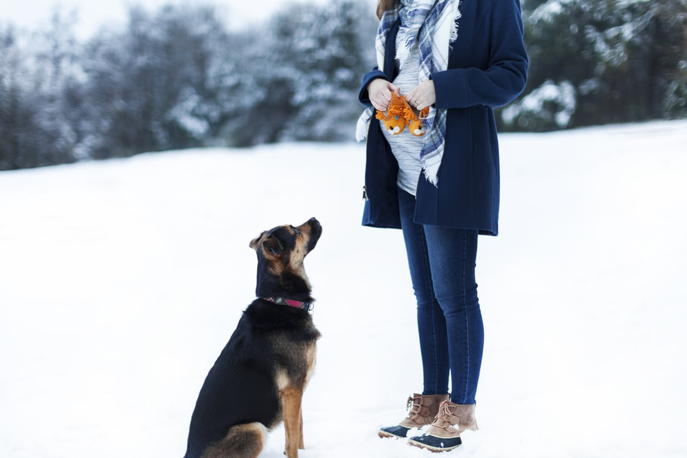 woman standing beside black dog on snow field