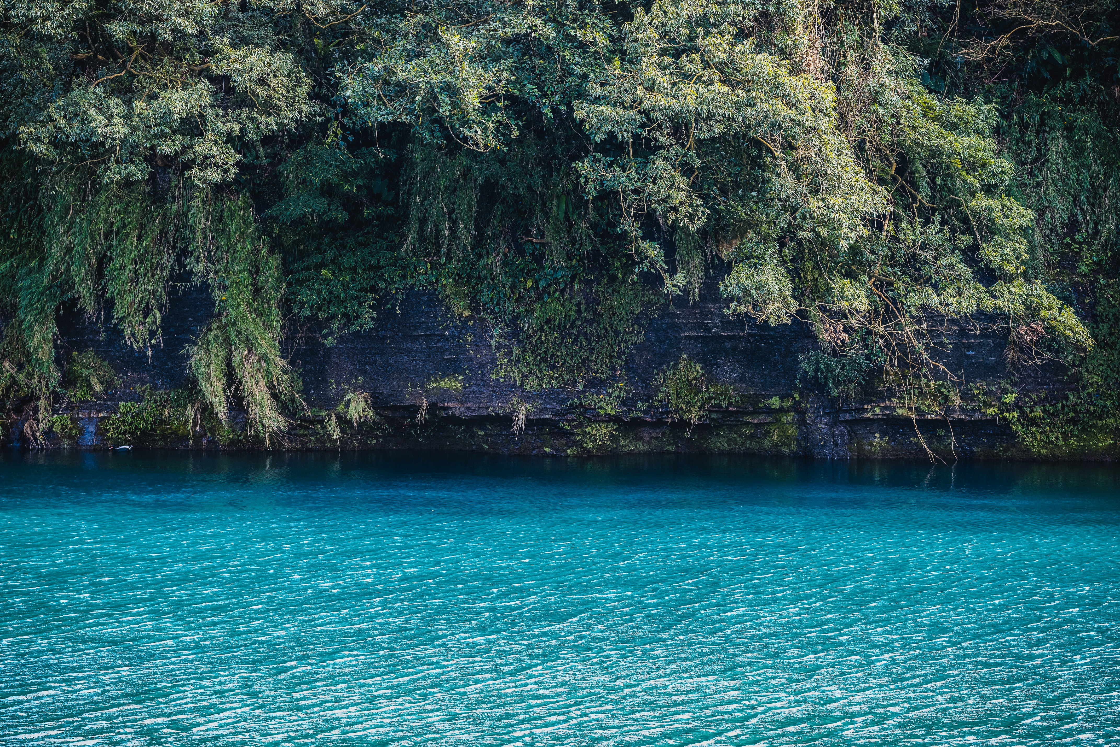 turquoise water near cliff with trees during daytime