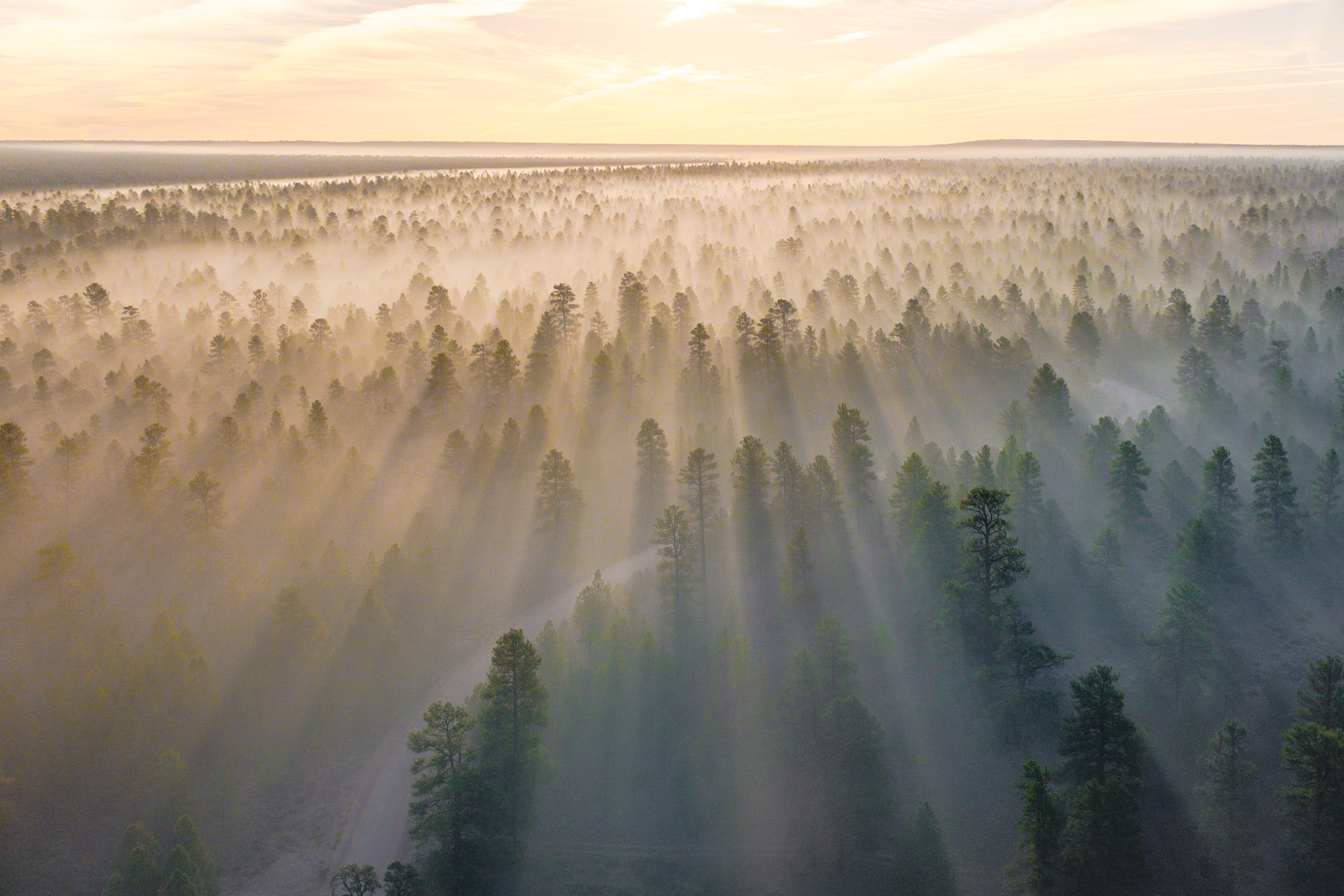 mountain with trees covered with fogs at daytime