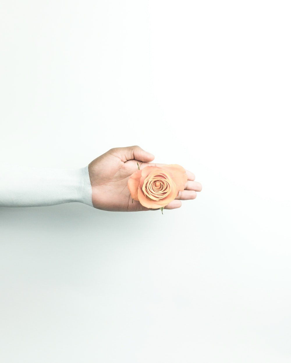 person holding brown flower