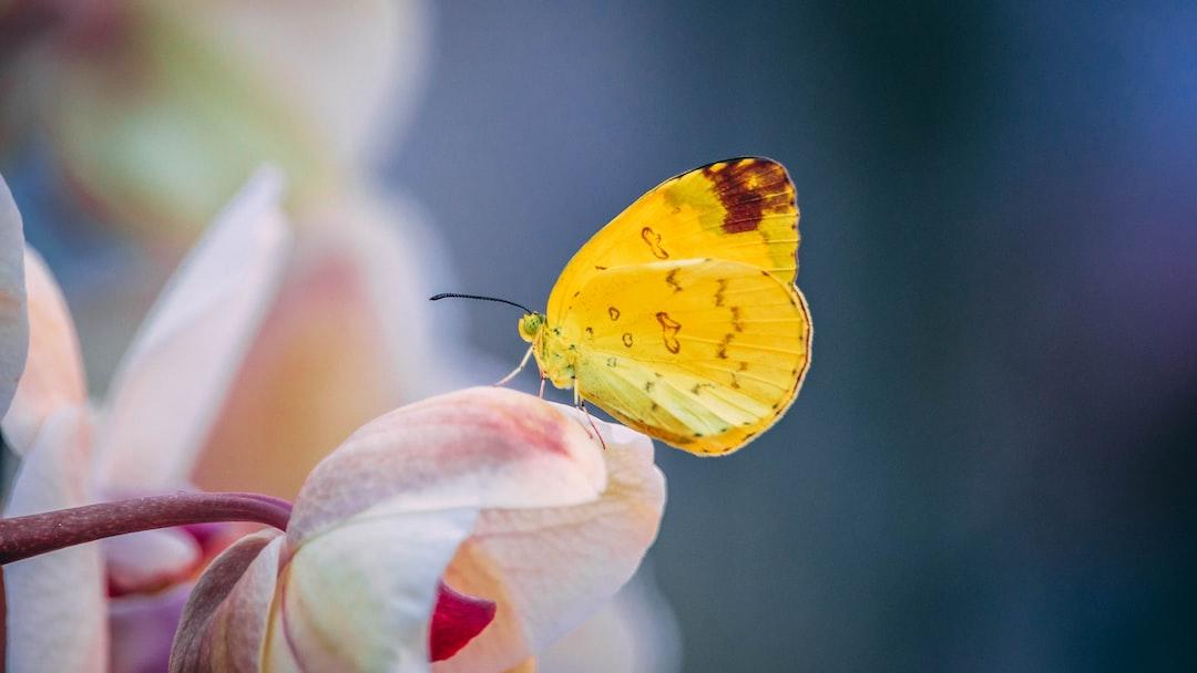 Borboleta (Butterfly), Chinua Achebe