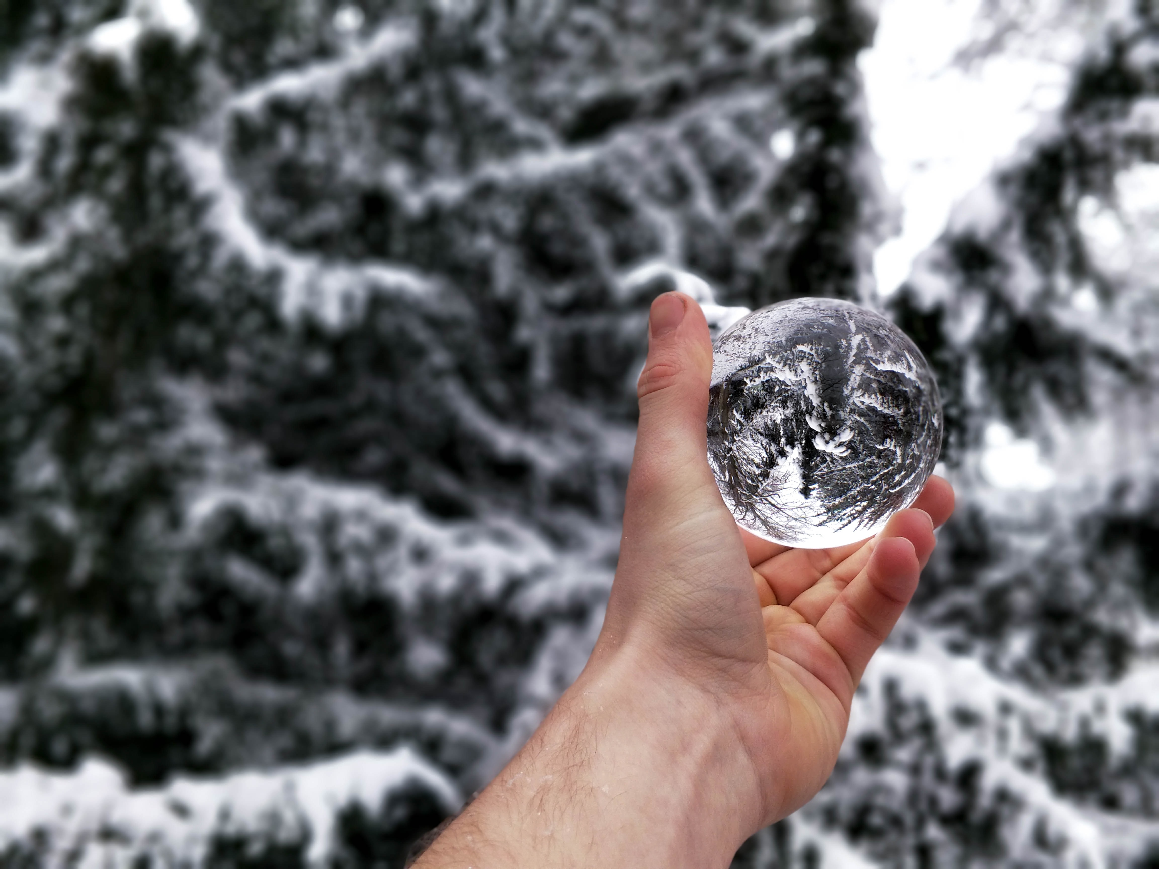 person's holding iced ball with reflection pine tree