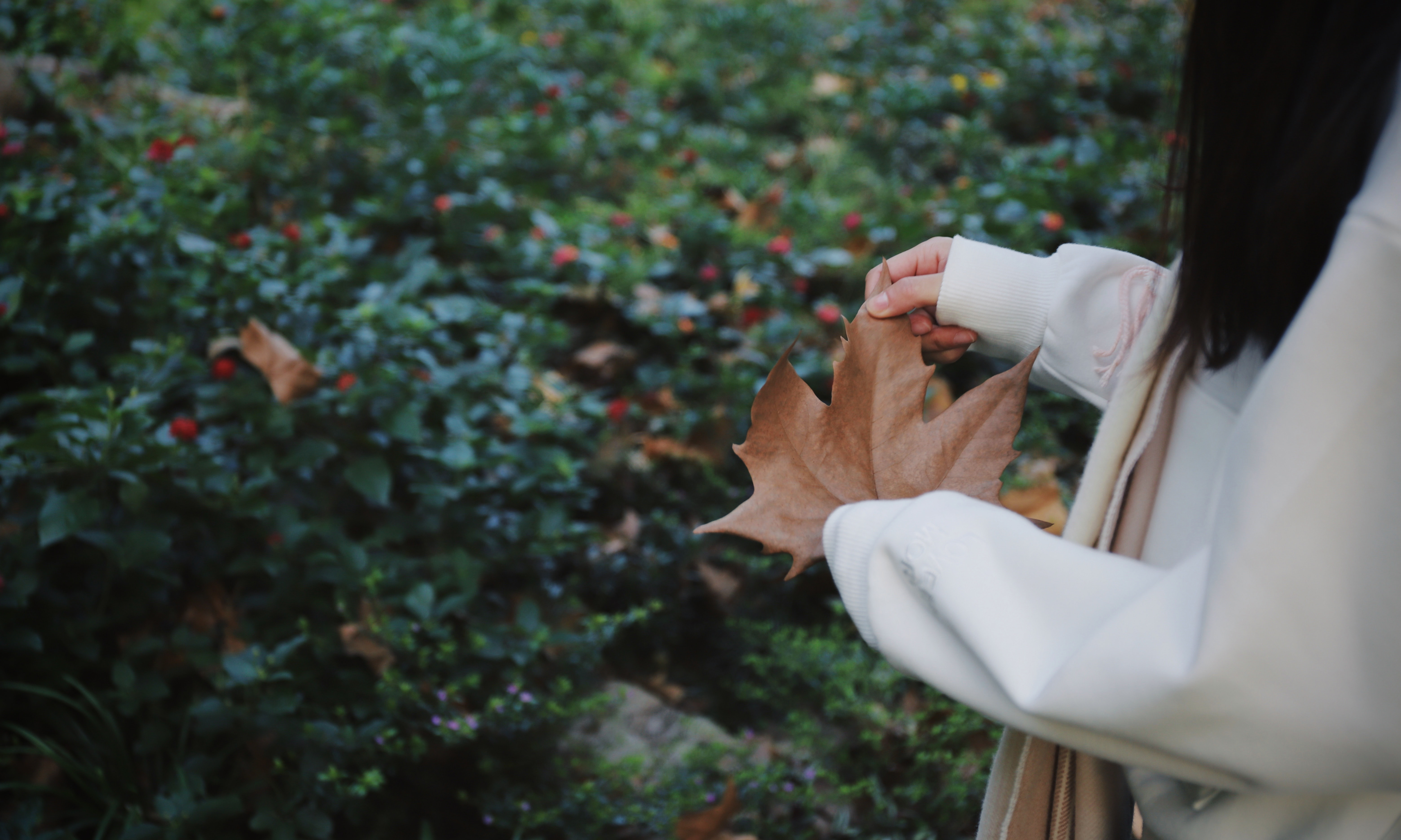 focus photography of woman in white coat holding brown maple leaf