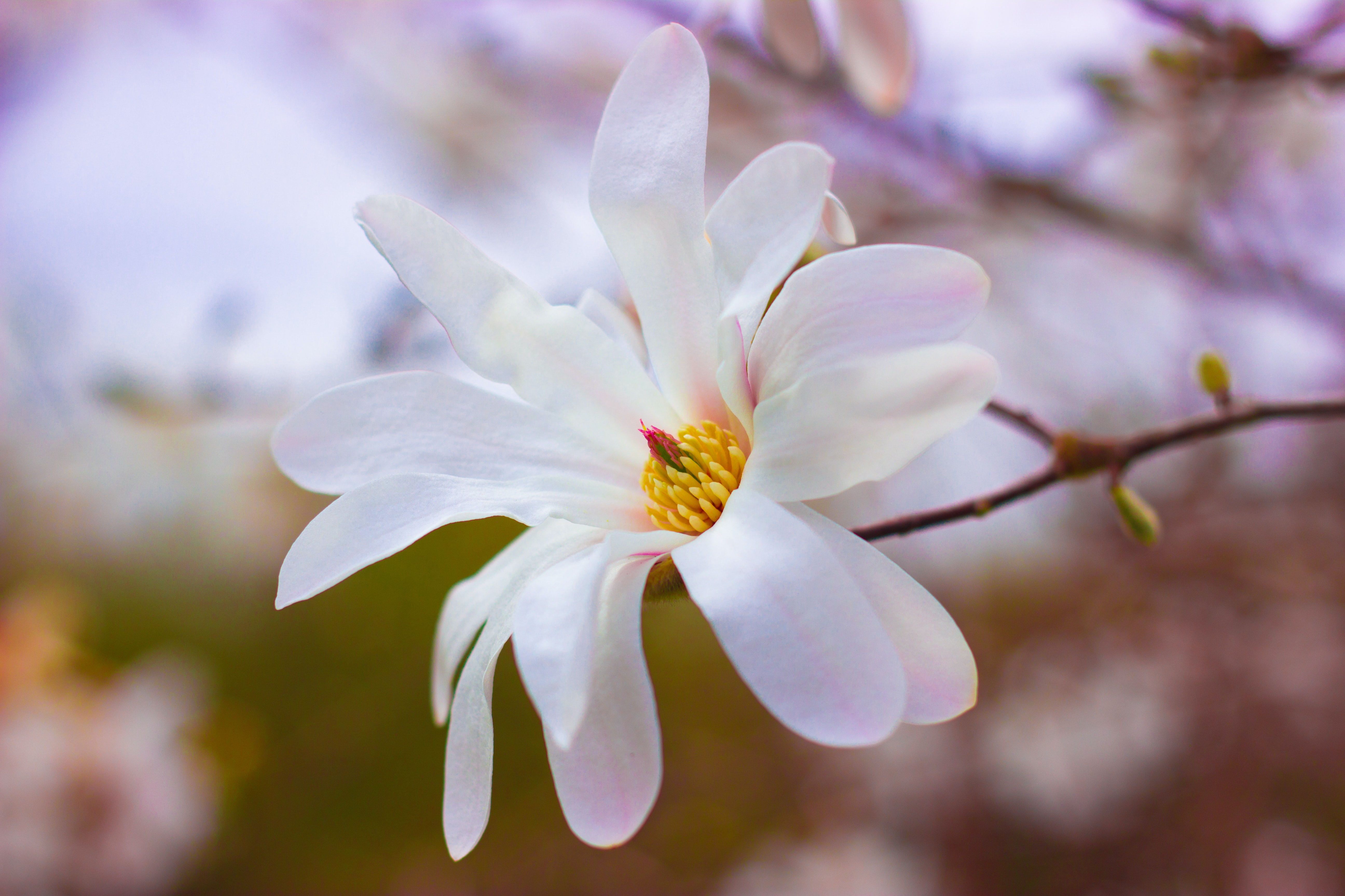 focus photography of blossom flower