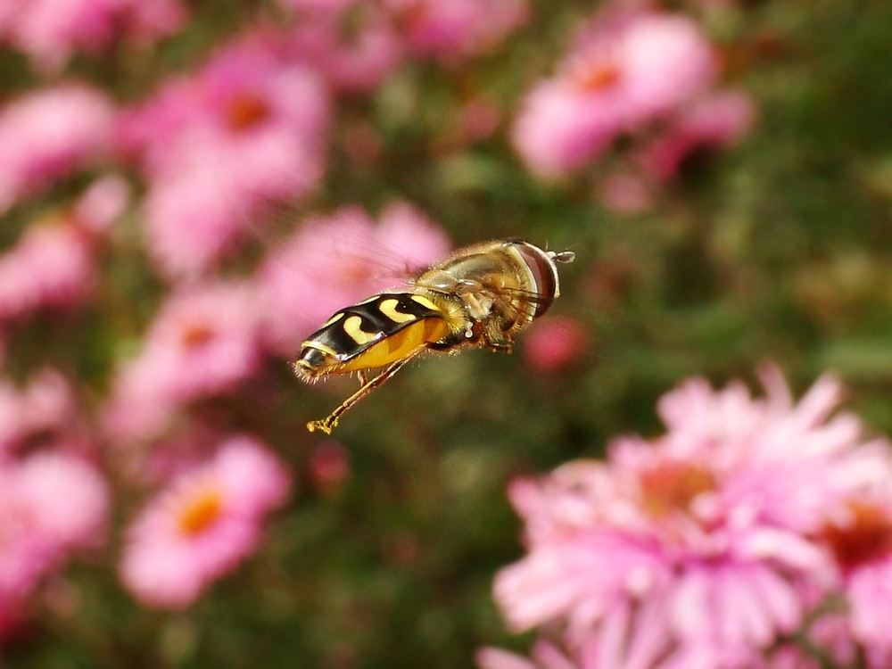 selective focus photo of black and yellow insect