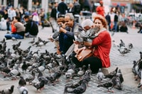 woman holding gray pigeon during daytime
