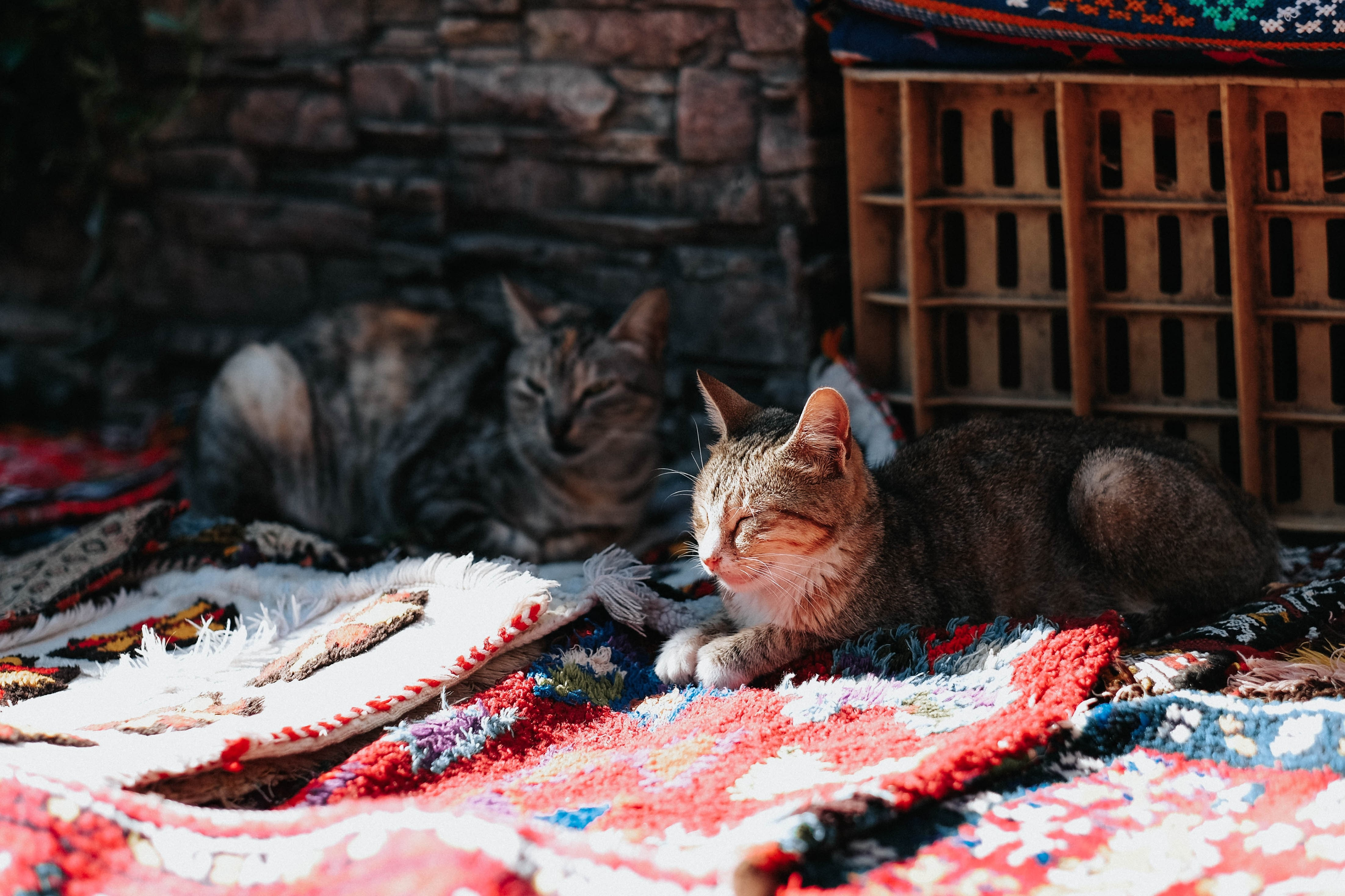 two brown cats crouching on textile