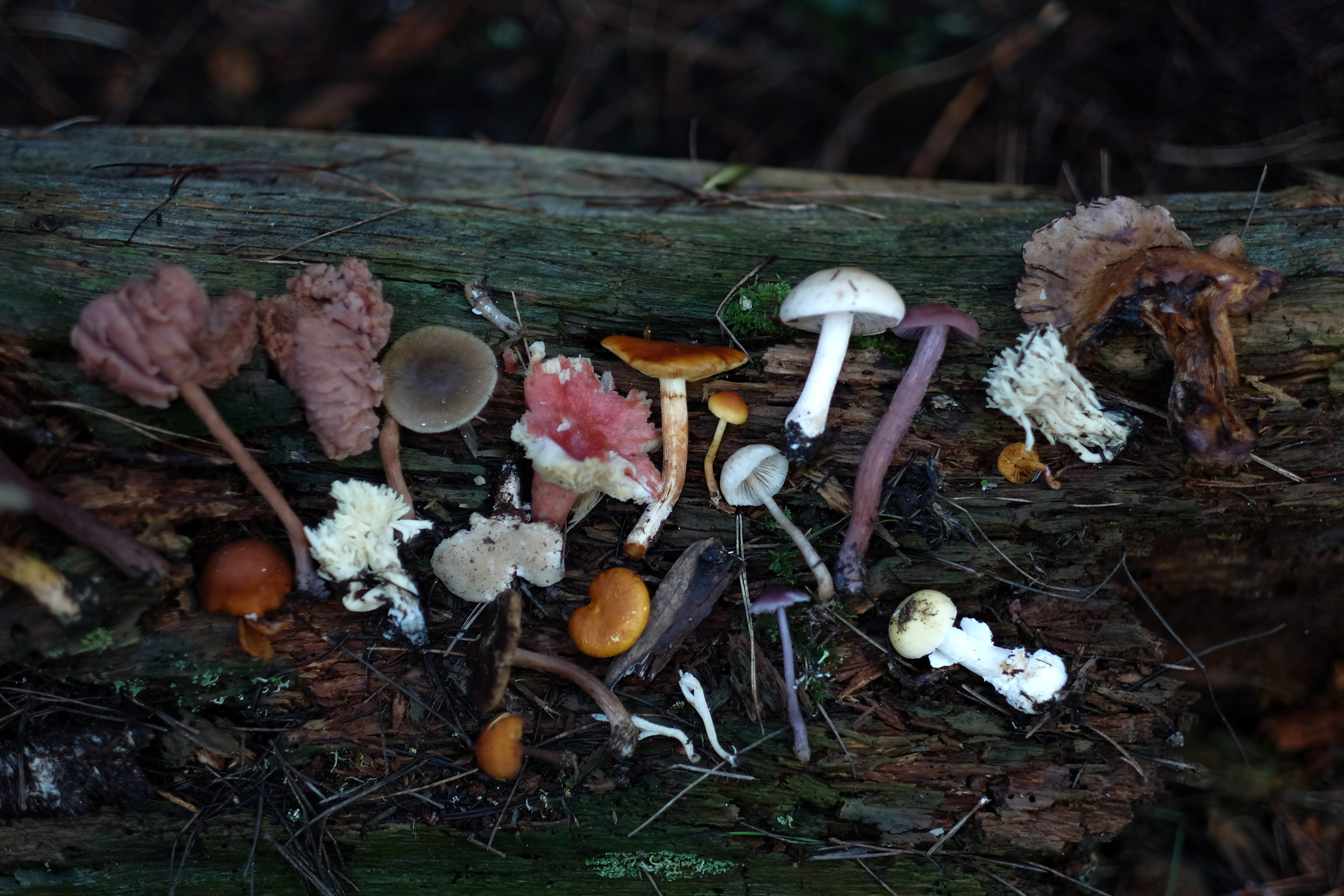 assorted mushrooms on woods