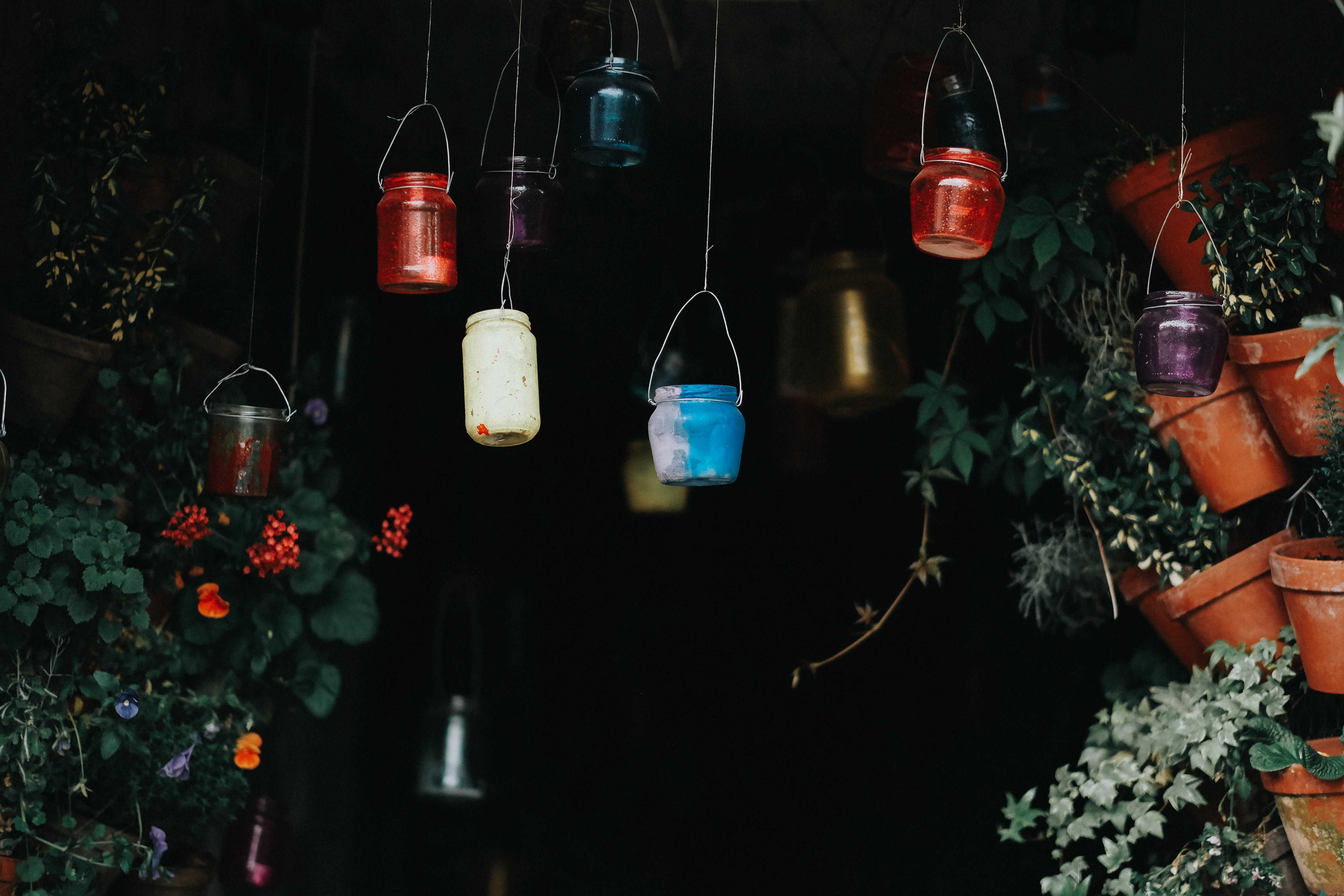photography of hanging plant pots