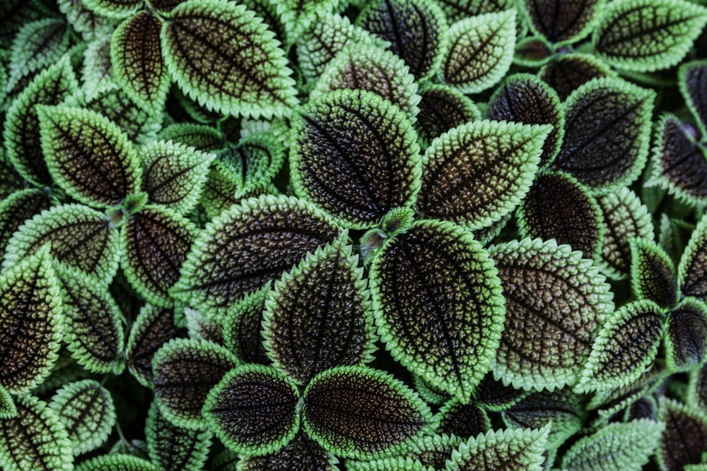 close-up photo of green-and-brown leaf plants