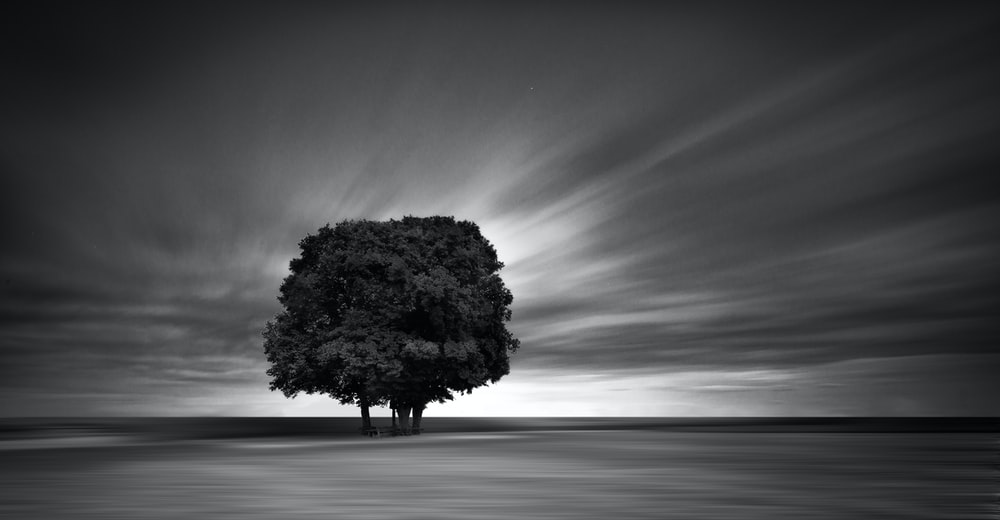 grayscale photography of tree
