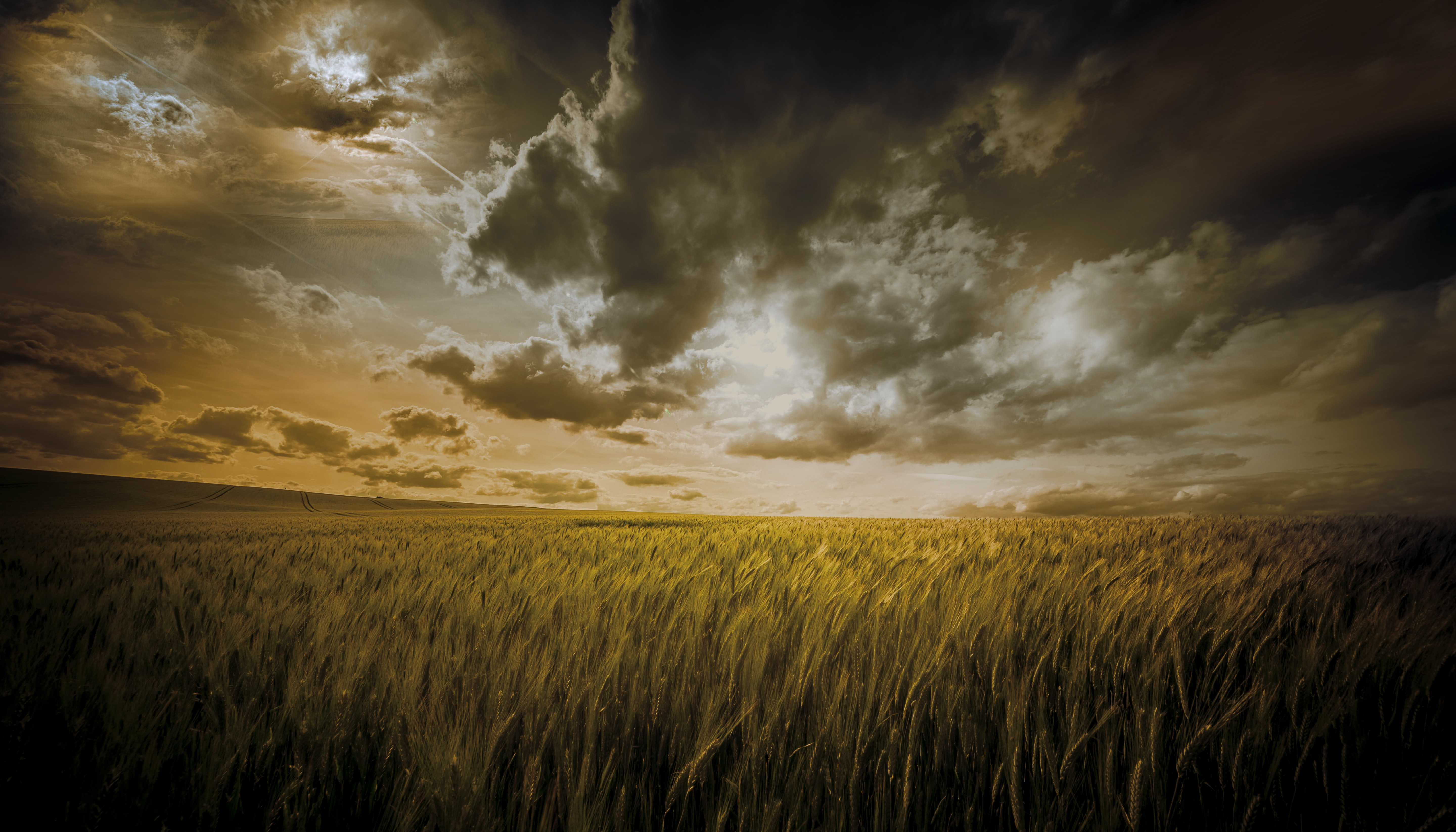 wheat field under cloudy sky