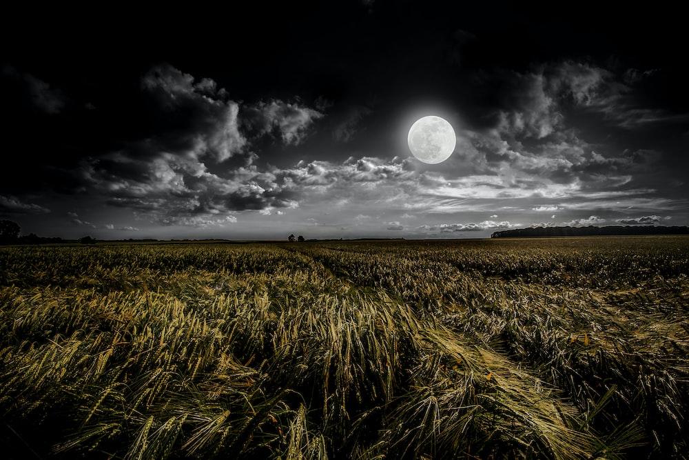 green grassland during night time
