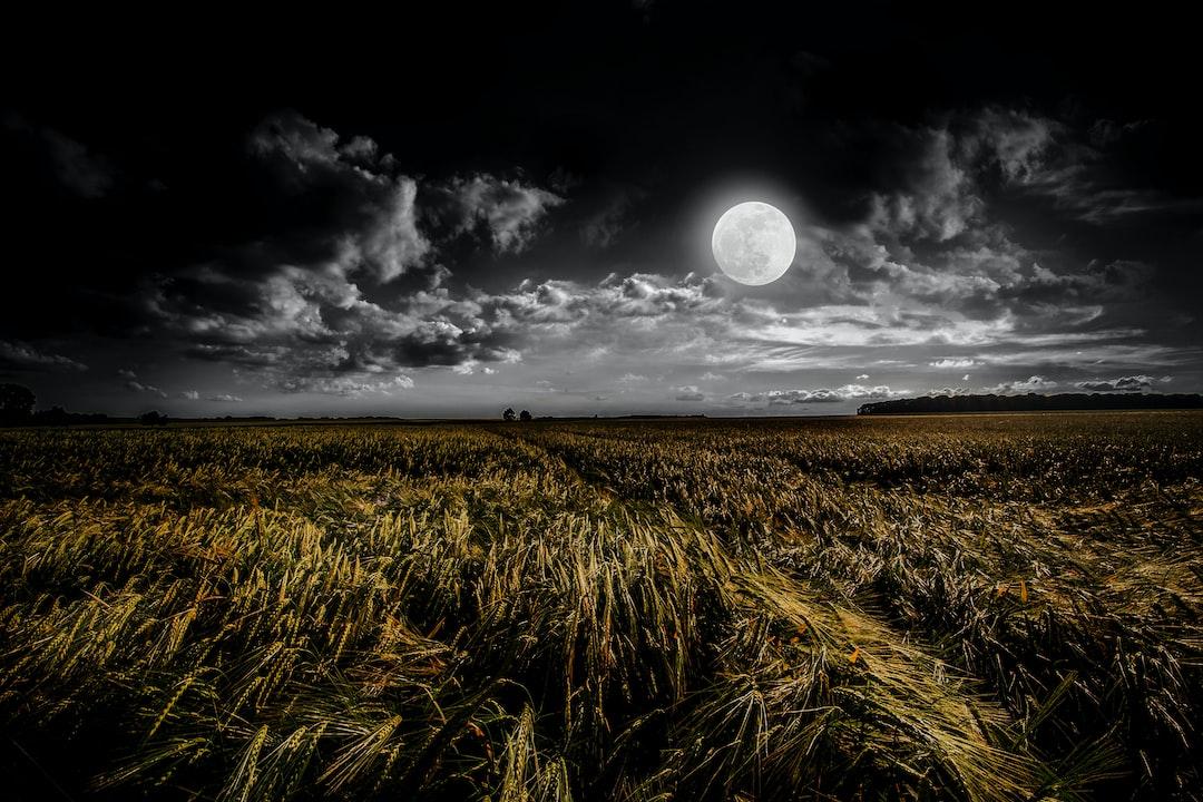 Měsíční a marťanská půda podporuje růst plodin