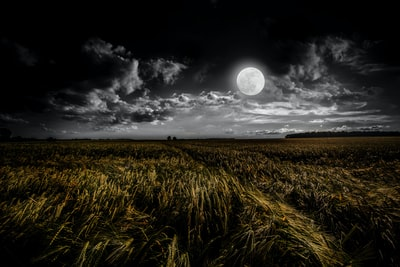 green grassland during night time moon teams background