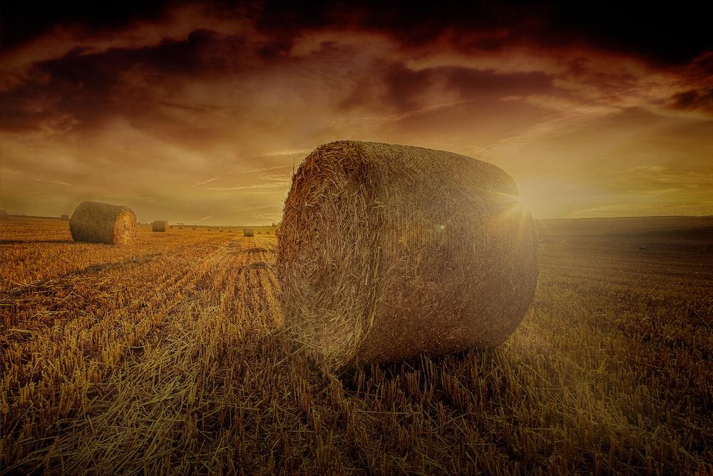 hay rolls photo during golden hour