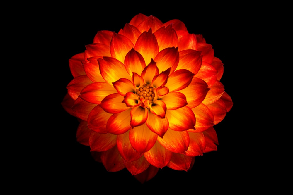 red and yellow flower digital wallpaper