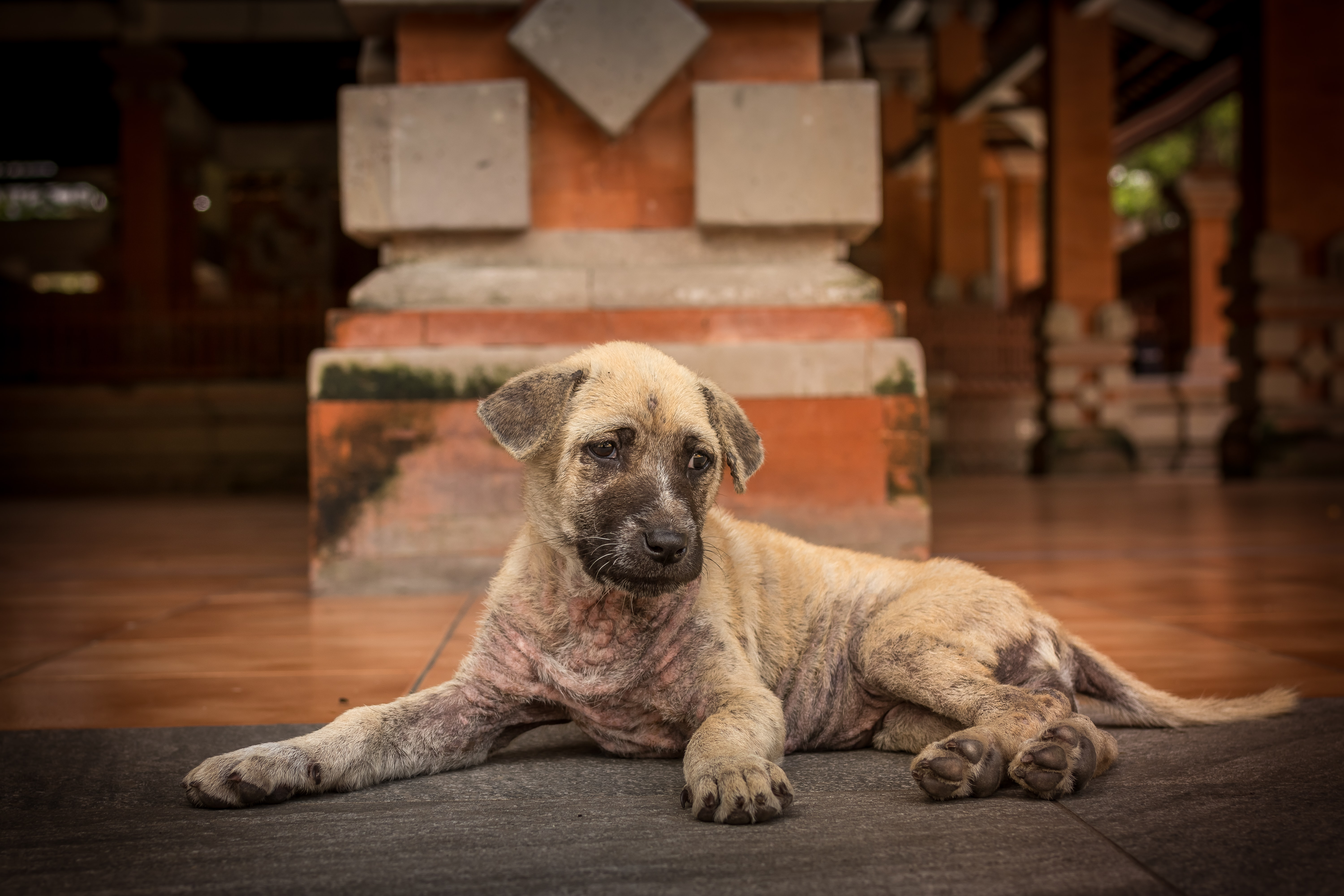 short-coated brown puppy