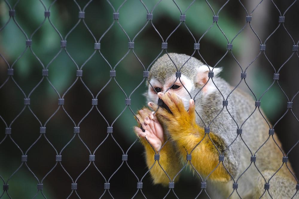 shallow focus photography of monkey holding fence