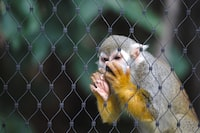 shallow focus photography of monkey holding fence