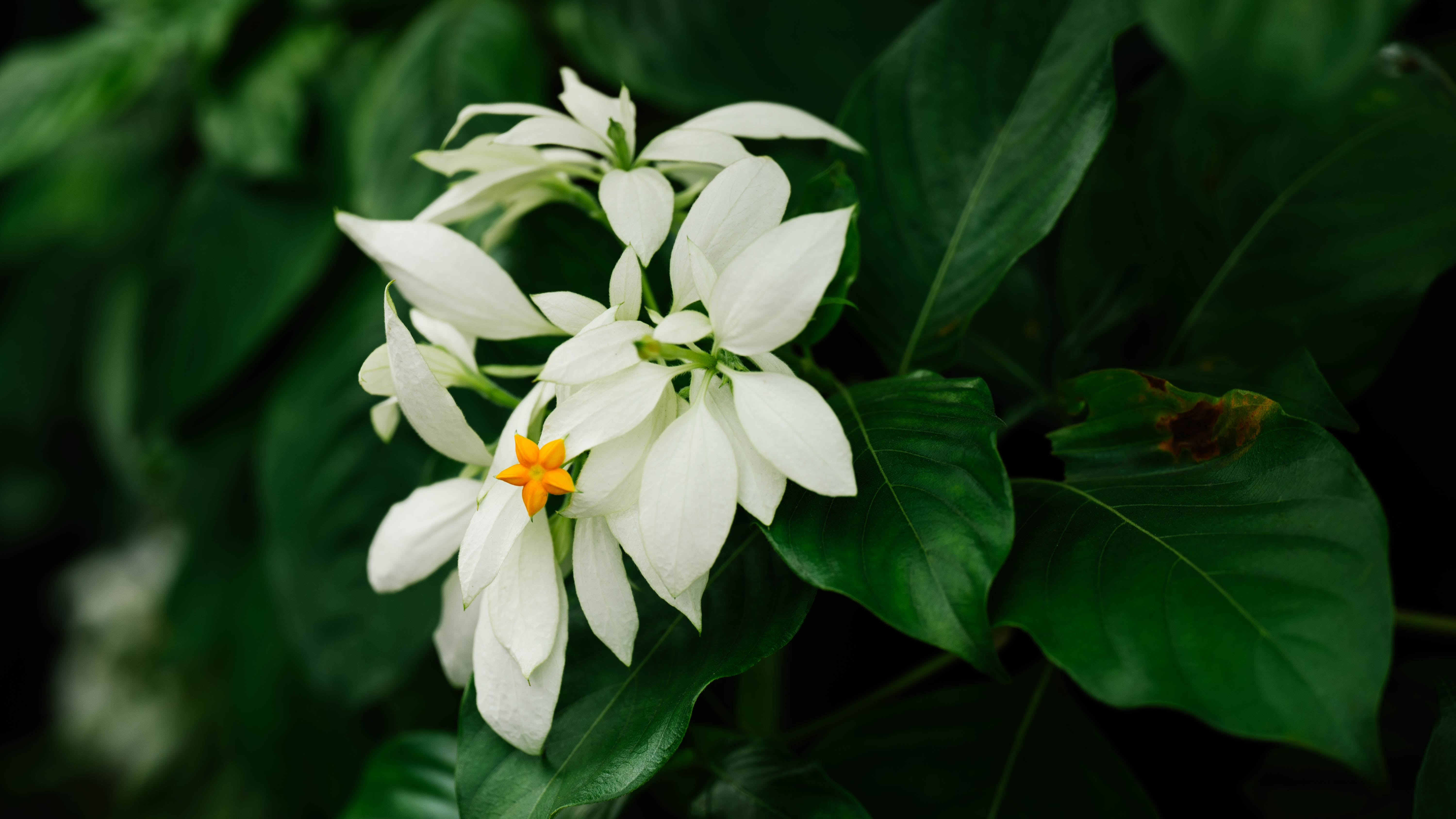 shallow focus photo of white flowers near green leaves