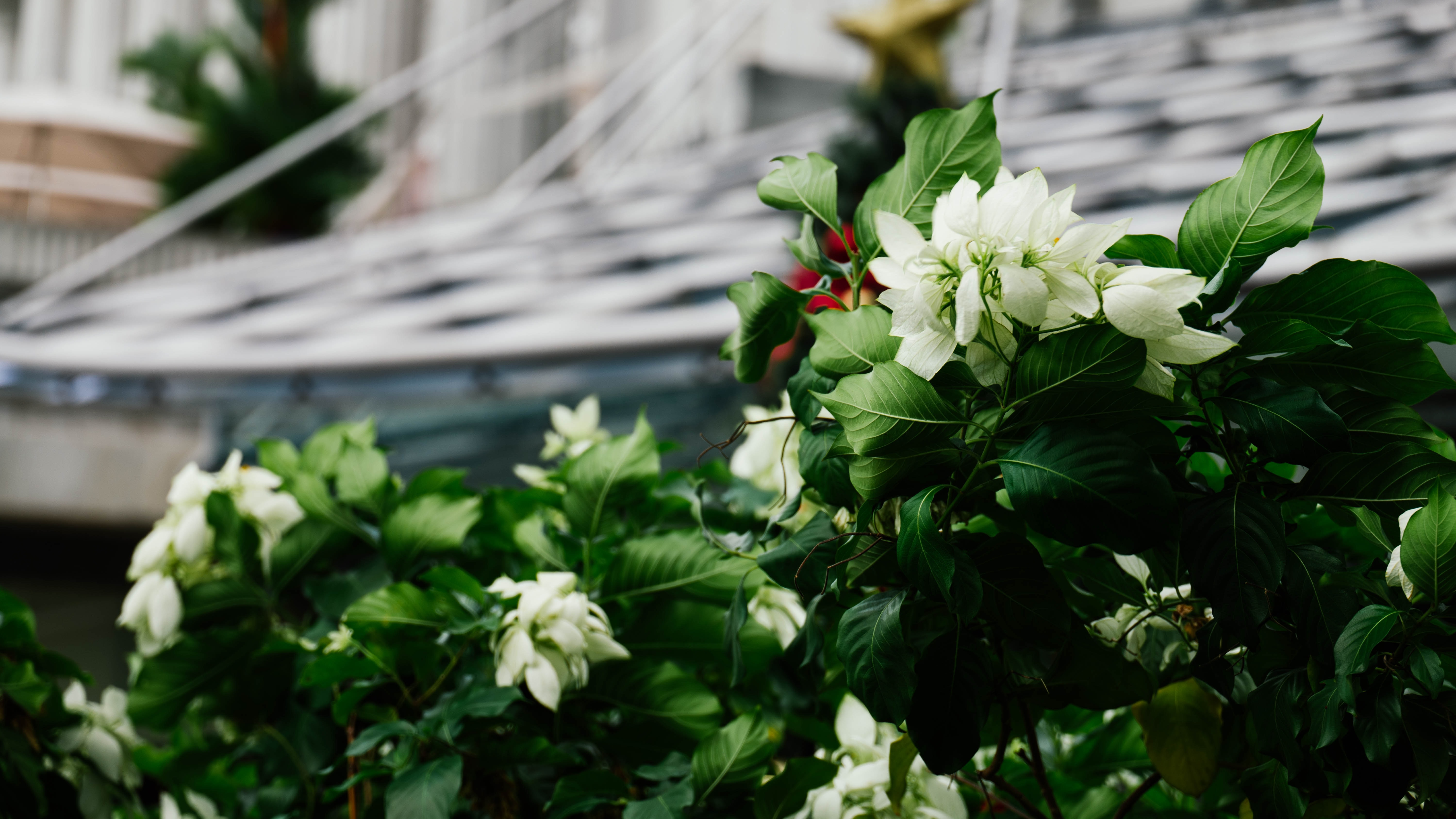 white flowers in bokeh photography