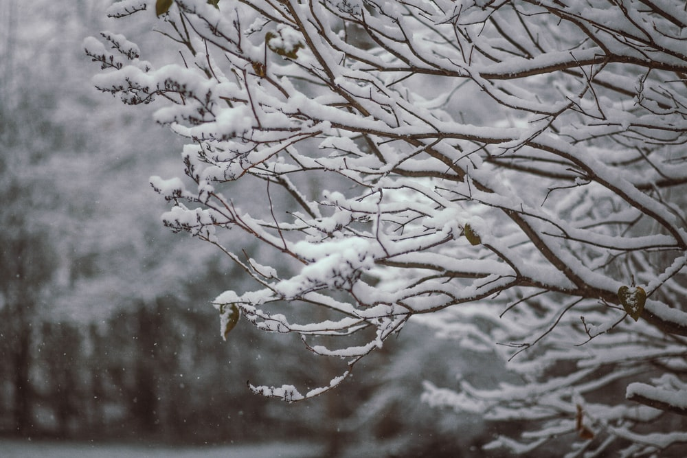 shallow focus photography of snow covered tree