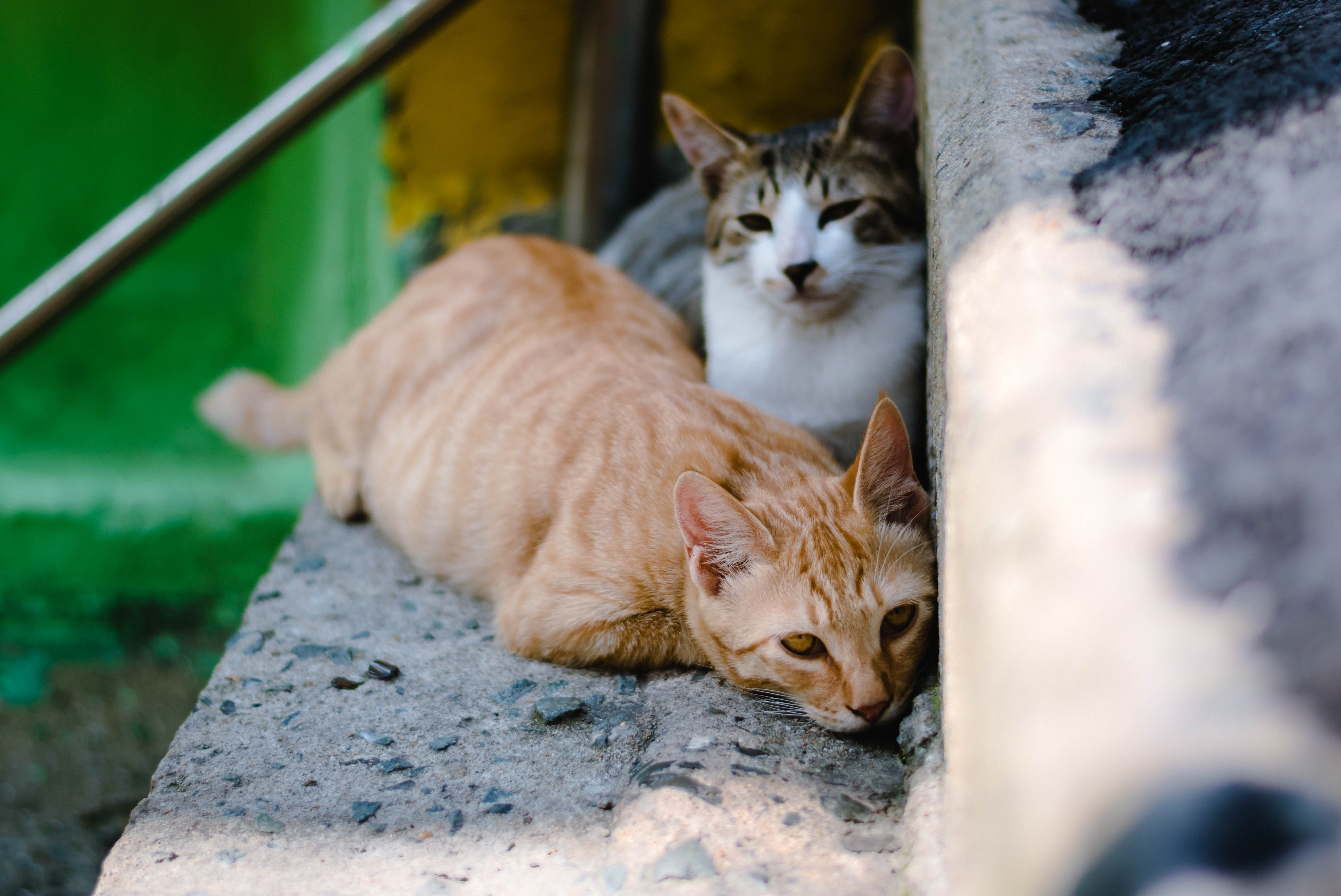 closeup photography of two orange tabby cat and tortoiseshell cat on concrete stairs