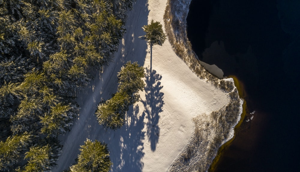 aerial photography of forest beside body of water
