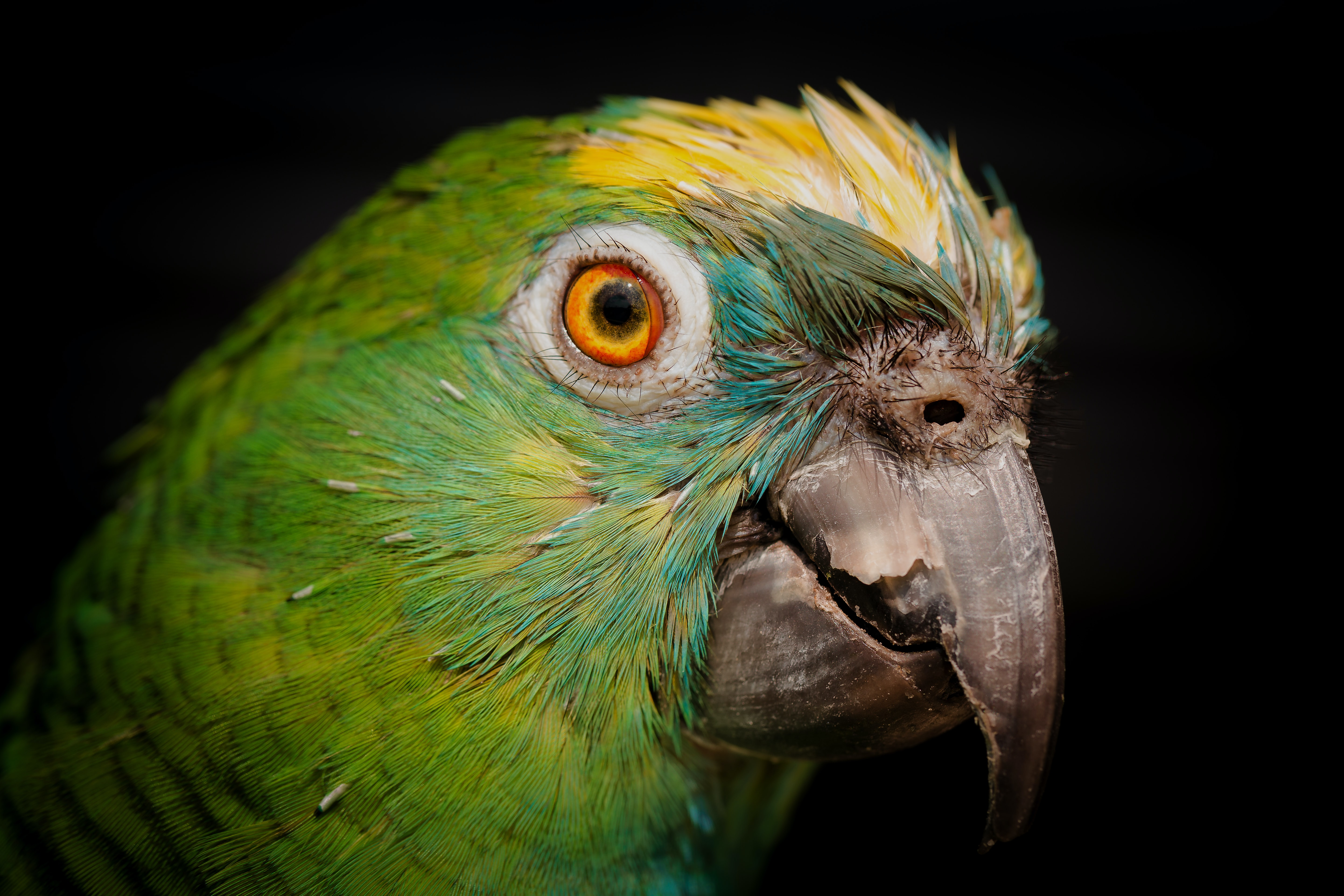 photo of green and yellow parrot