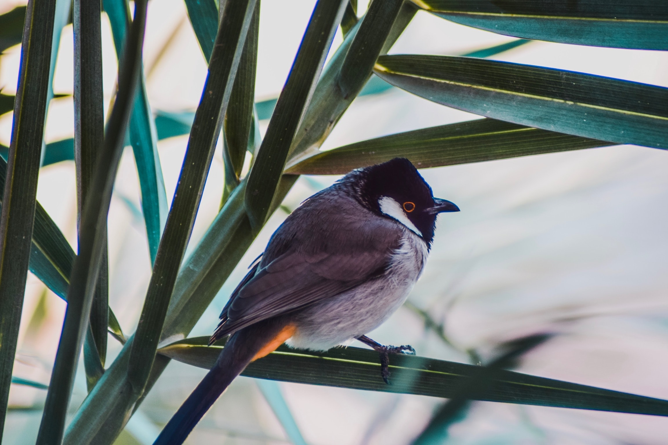 short-beaked grey and black bird perched on green leafed plant
