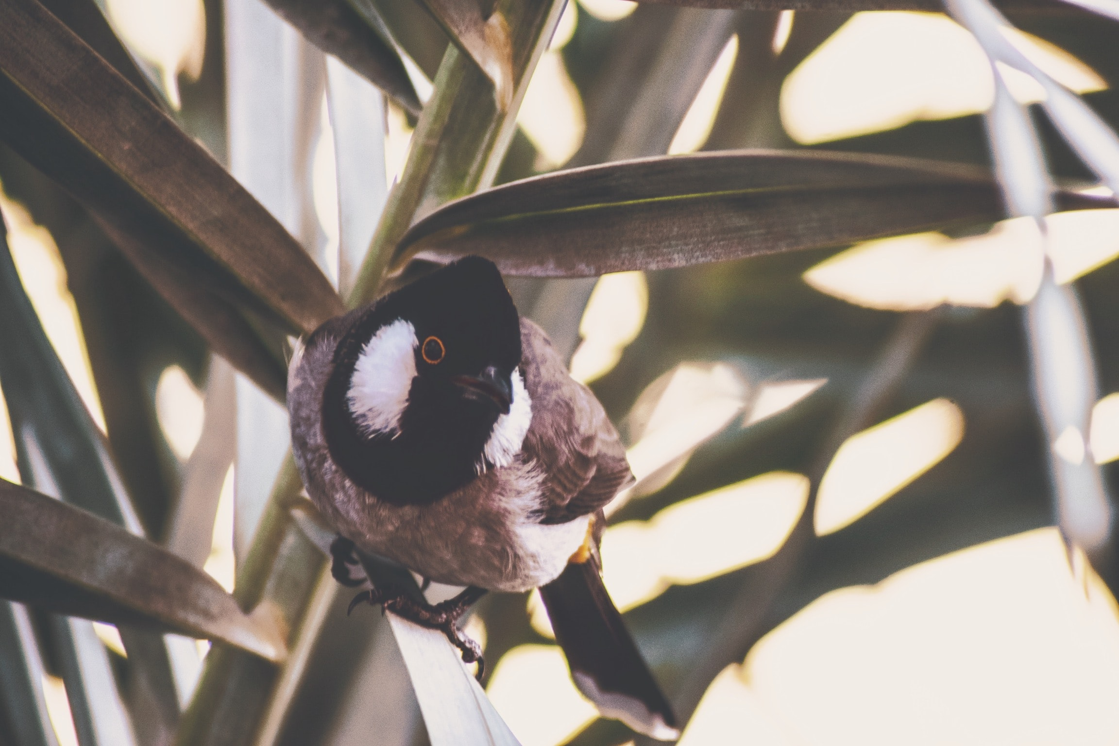focus photo of brown and black bird