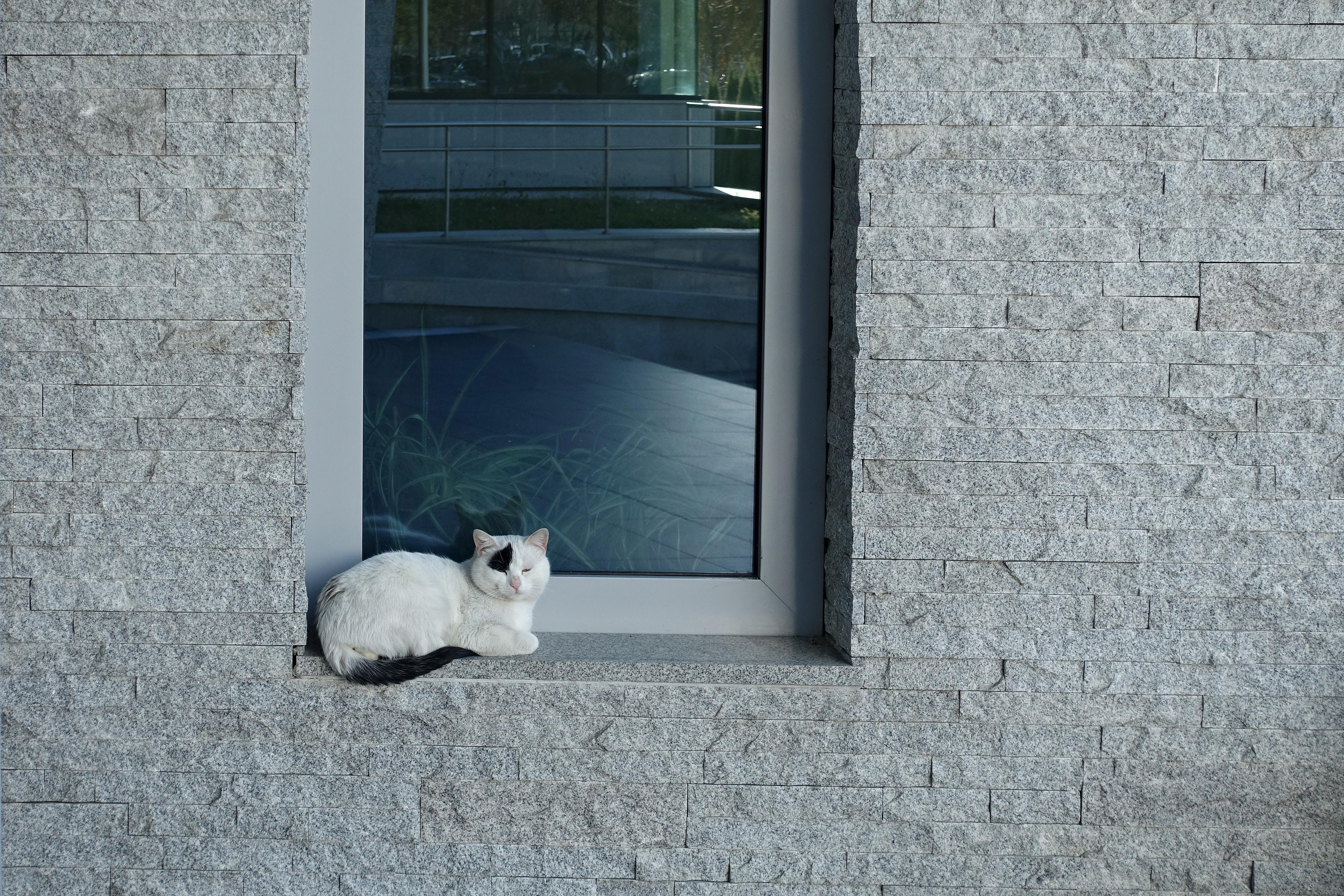 white cat sitting beside glass window