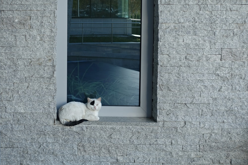 white cat sitting beside glass window