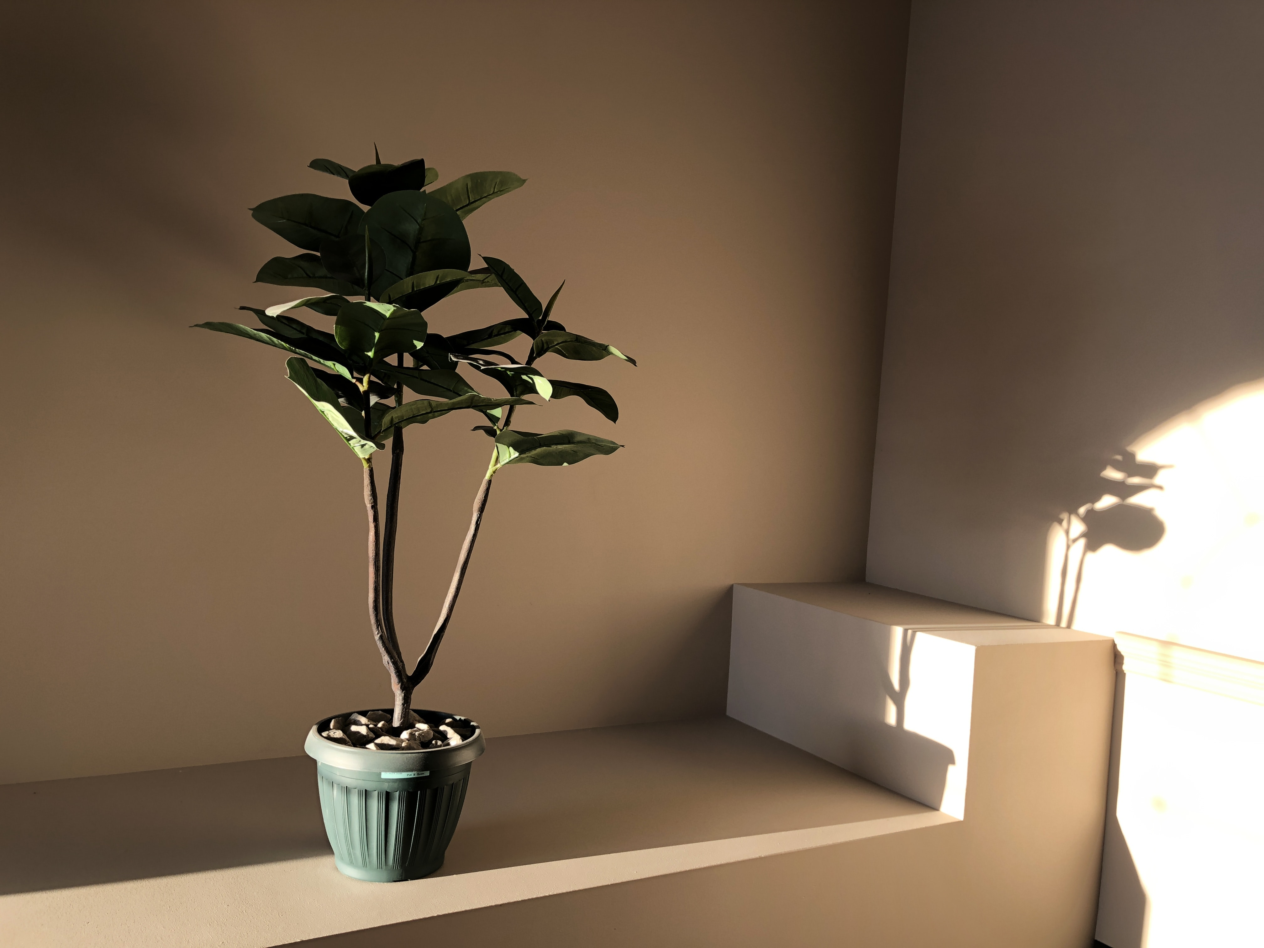 green leafed plant with pot on brown surface