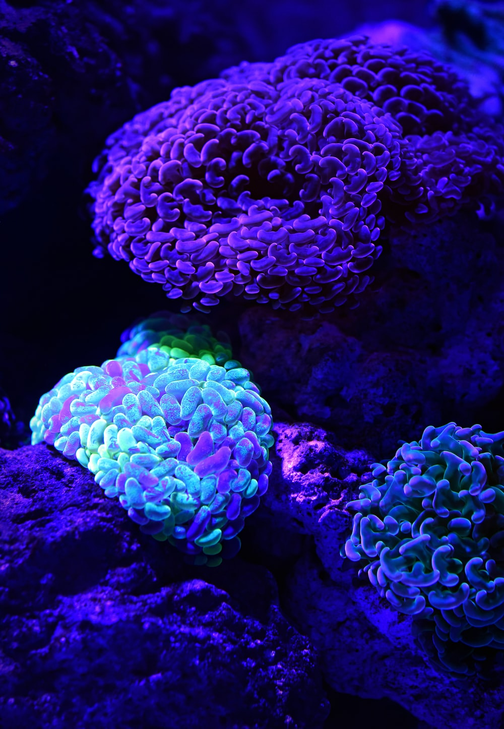 selective color of teal coral reef underwater photography