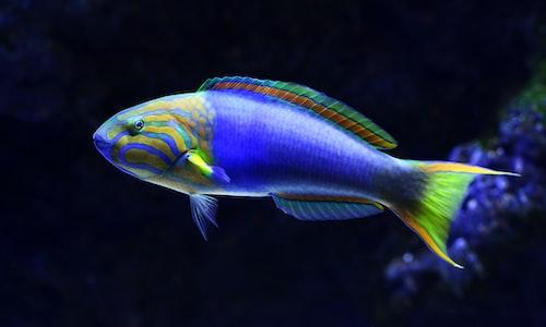 aquarium pickup line