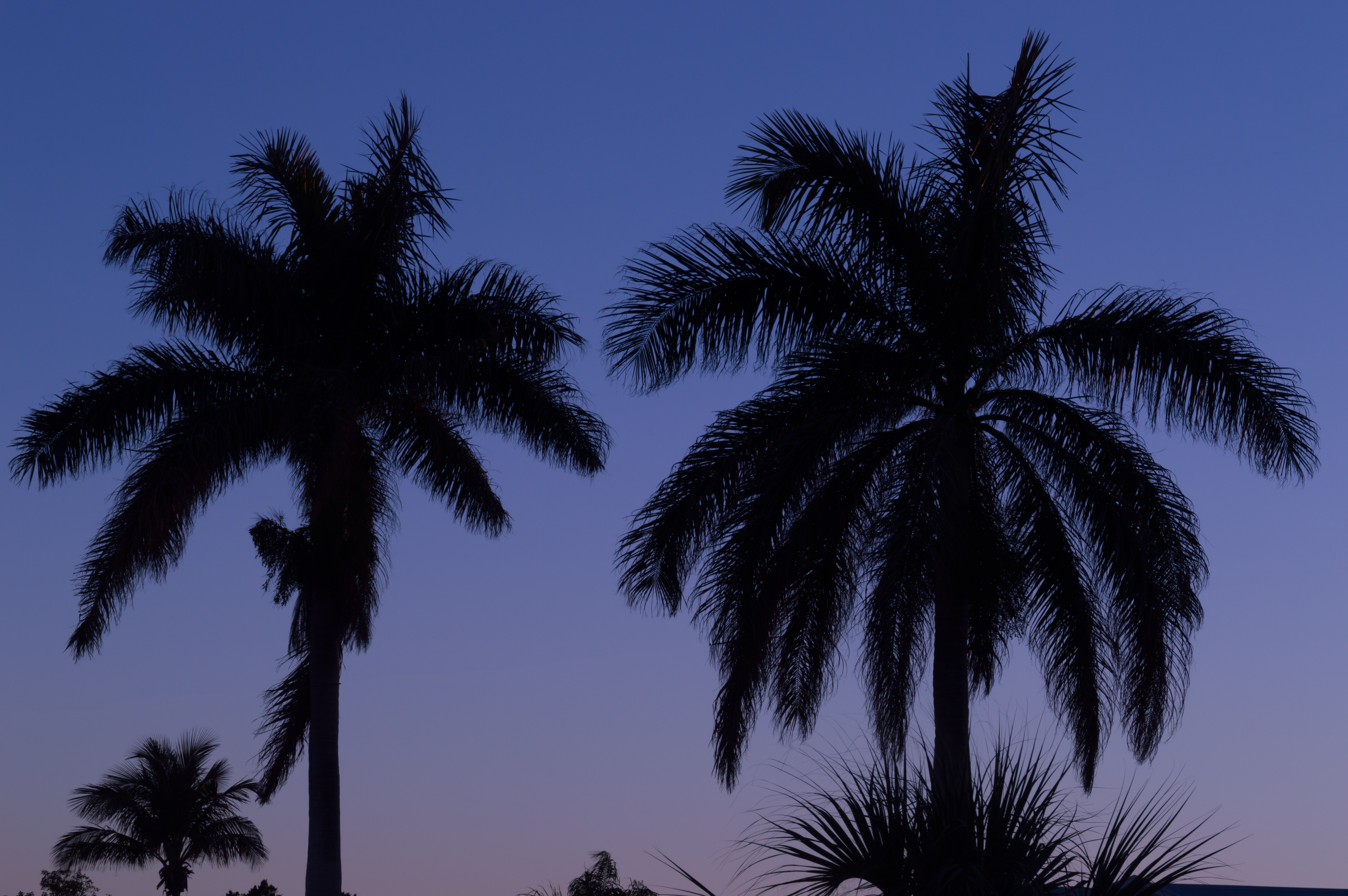 silhouette photography palm trees