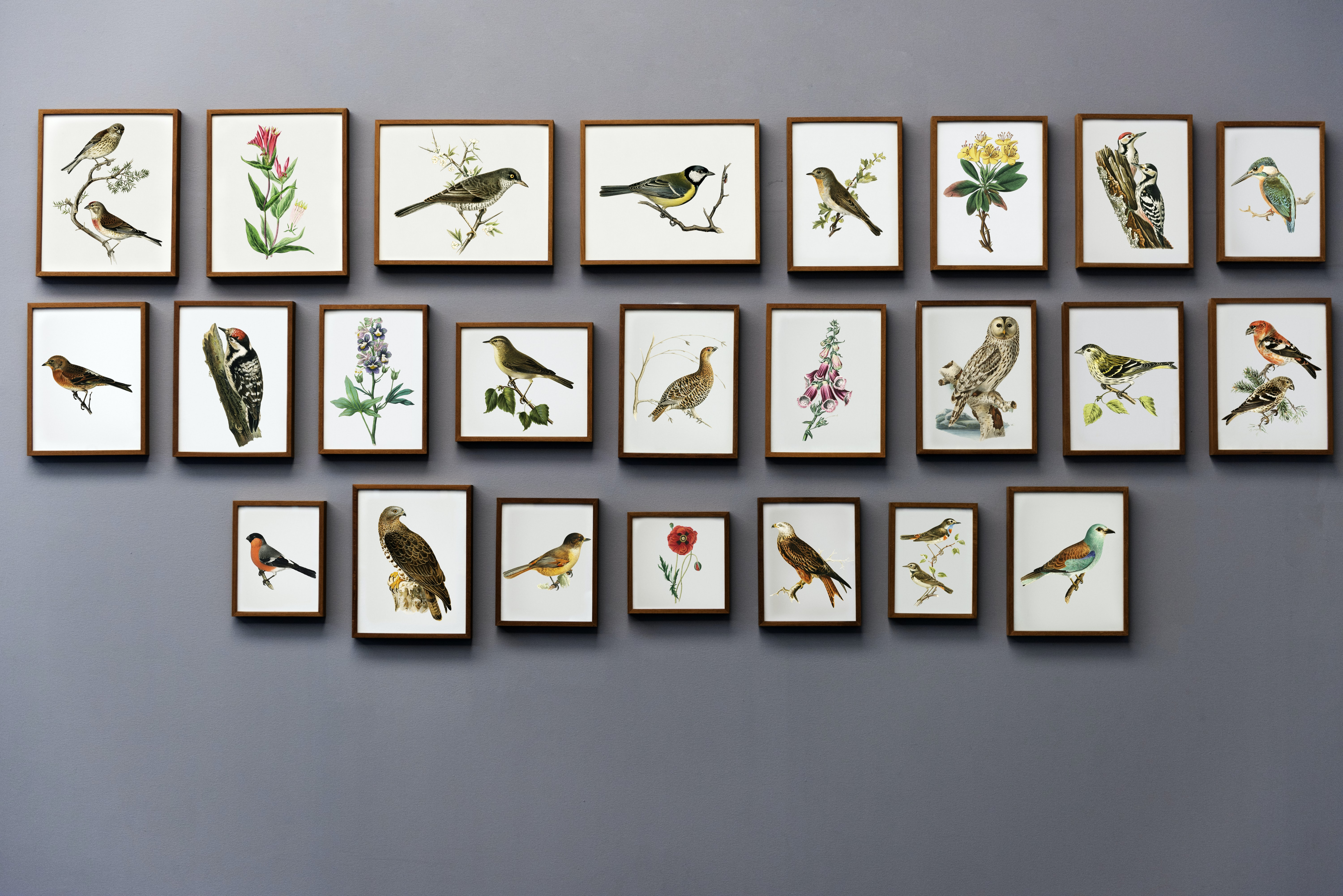 assorted bird painting collection