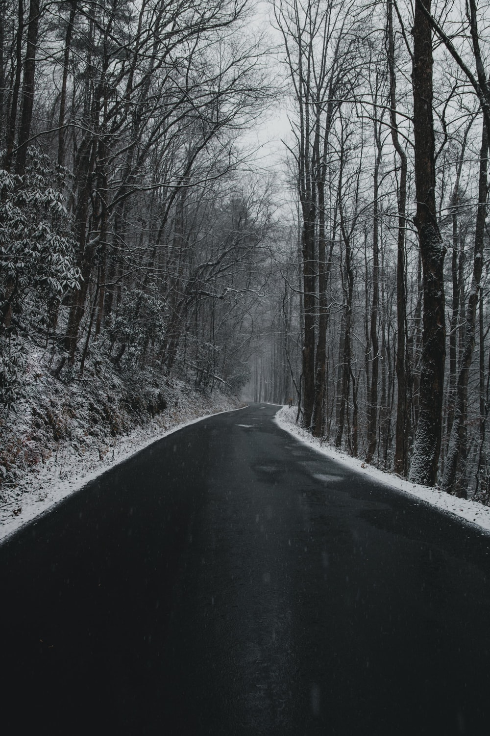 road in the middle of bare trees
