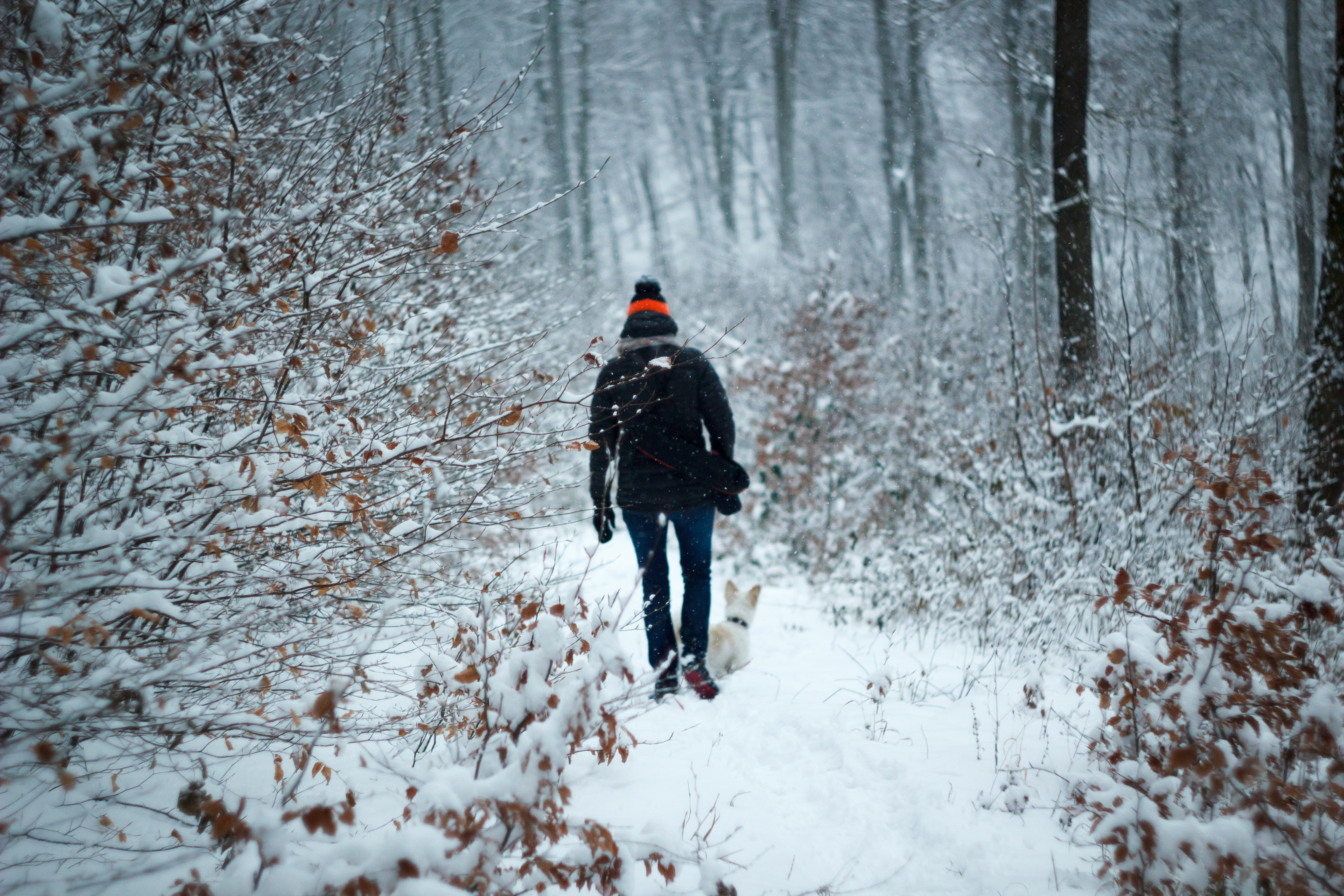 person walking between trees during winter