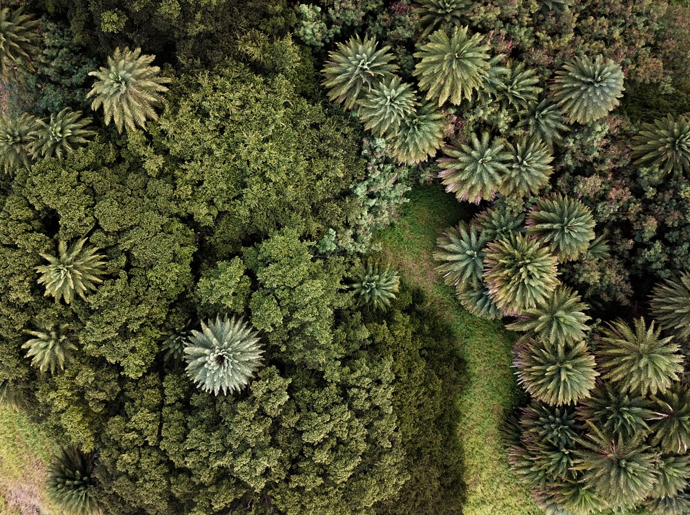 top-view photography of green trees