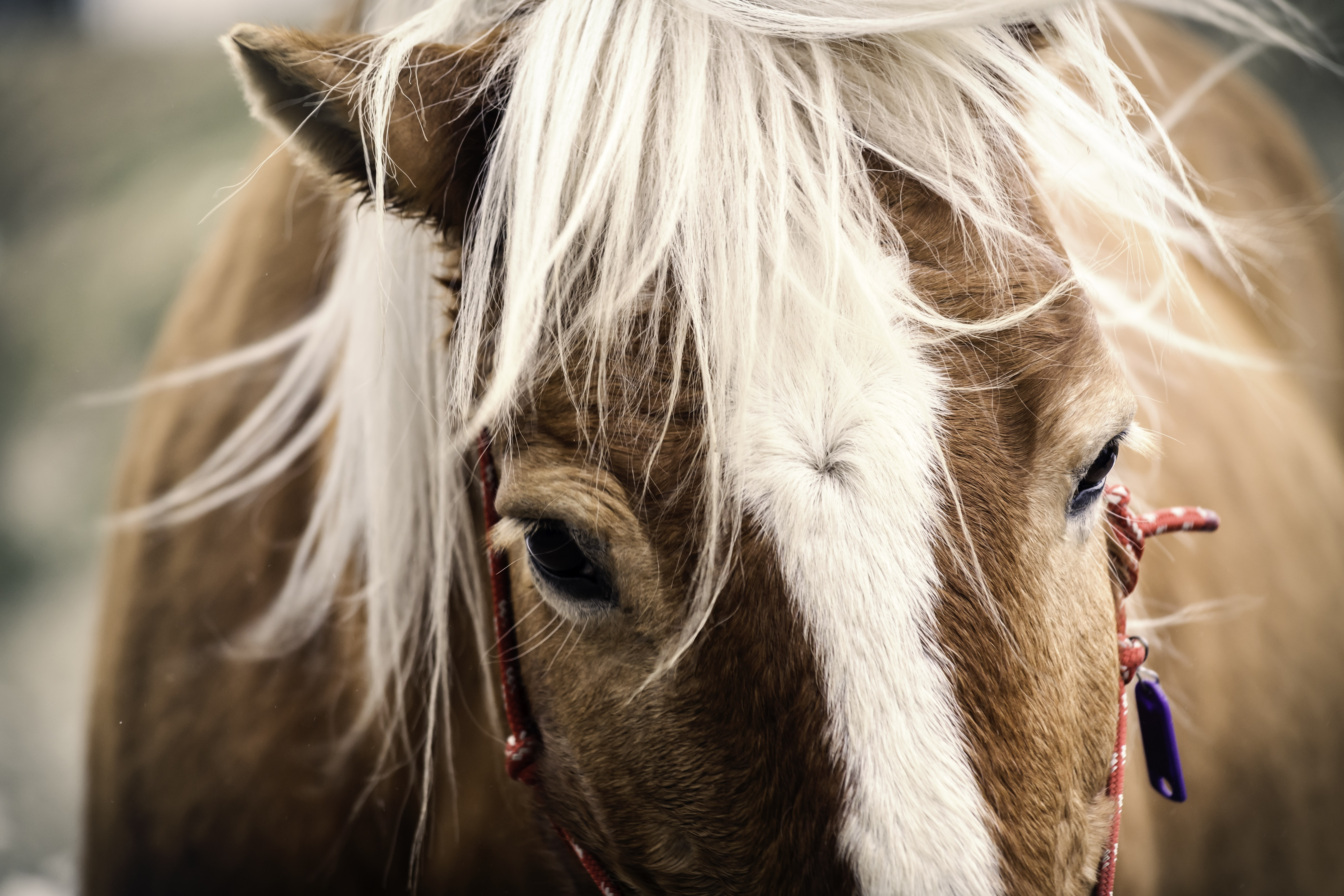 brown and white horse photo