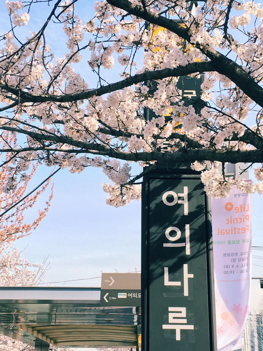 green shed sign with Hangul text during daytime beside tree with light pink flowers during daytime