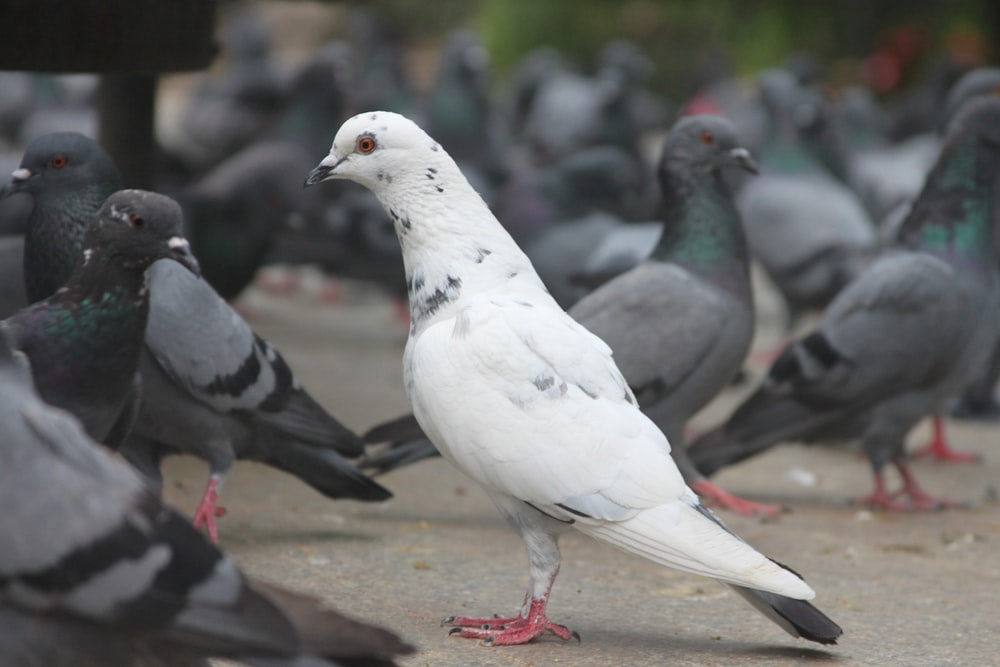selective focus photography of white and black pigeons